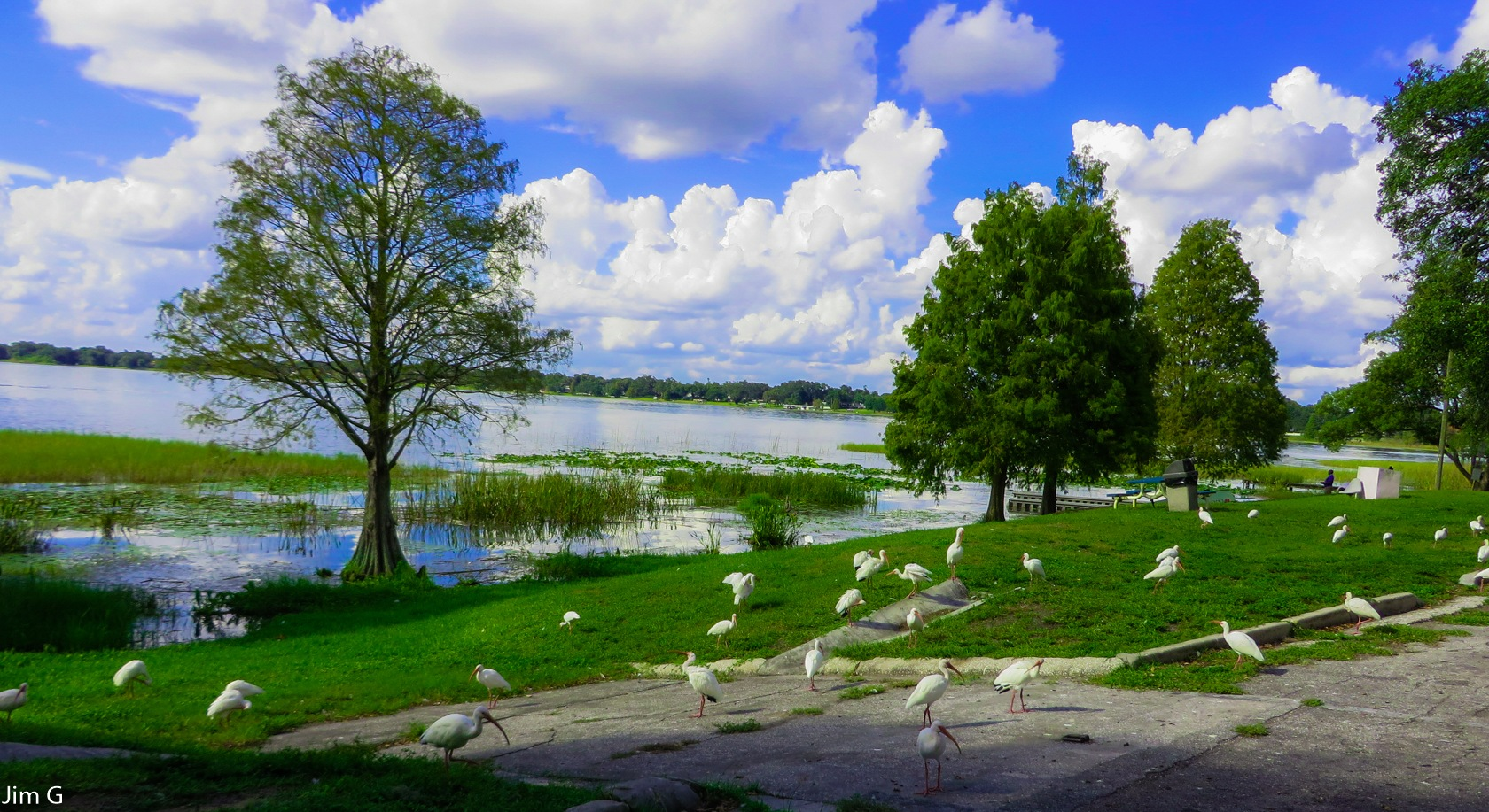 Lakeside with Ibis Feeding by Jim Graham