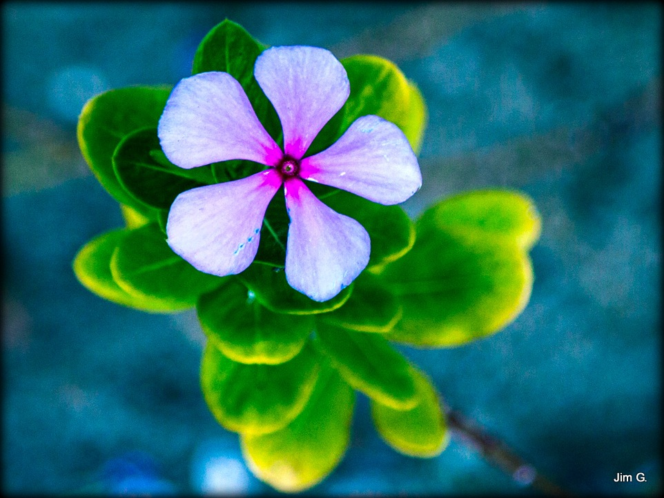Bloom from the top by Jim Graham