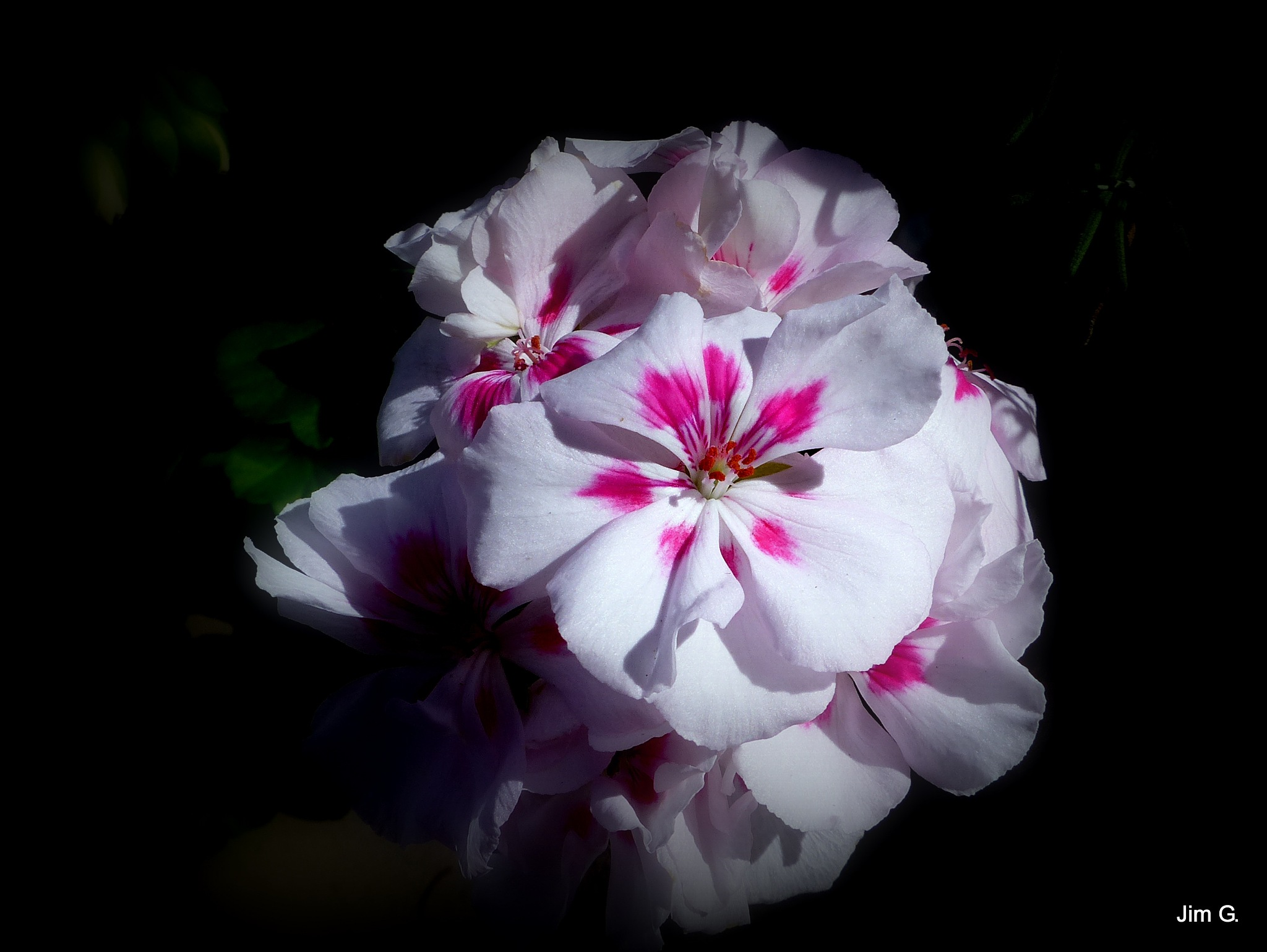 Bloom cluster by Jim Graham