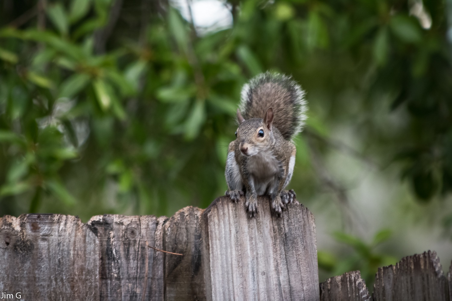 Curious squirrel by Jim Graham