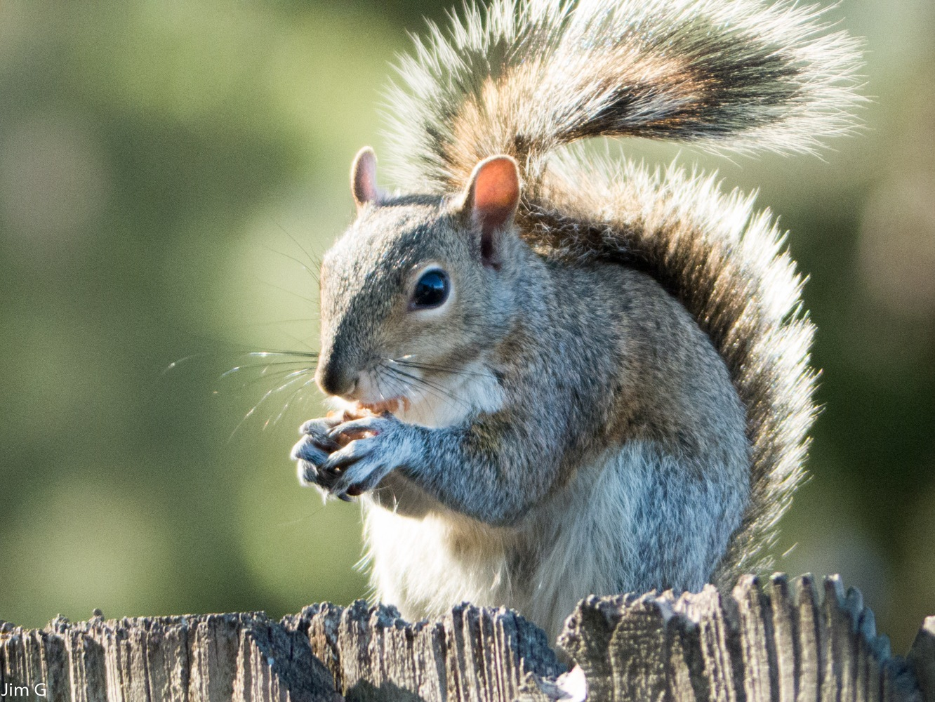 Squirrel in very bright sunlight by Jim Graham