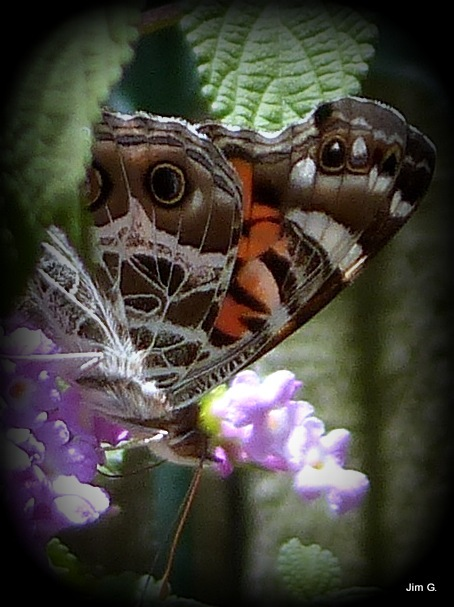 Colorful Moth on Flowers by Jim Graham