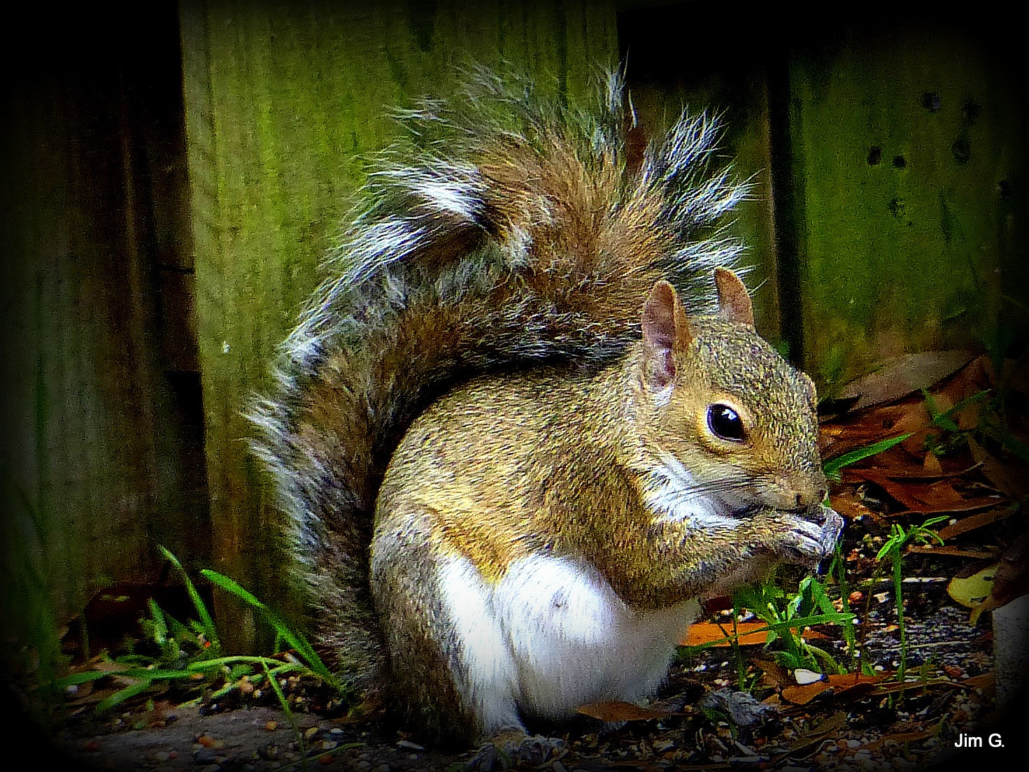HDR edit of pregnant little Mother Squirrel by Jim Graham