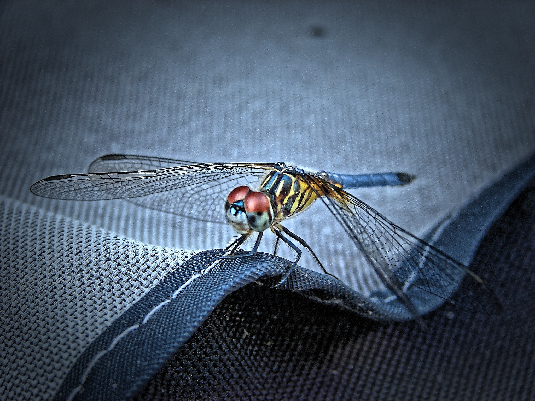 Re-edit of Dragonfly on Canvas by Jim Graham