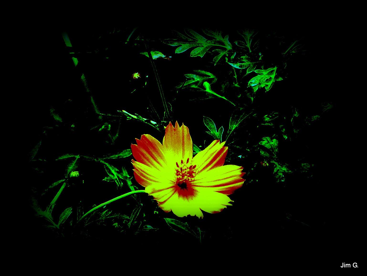 Yellow Bloom by Jim Graham
