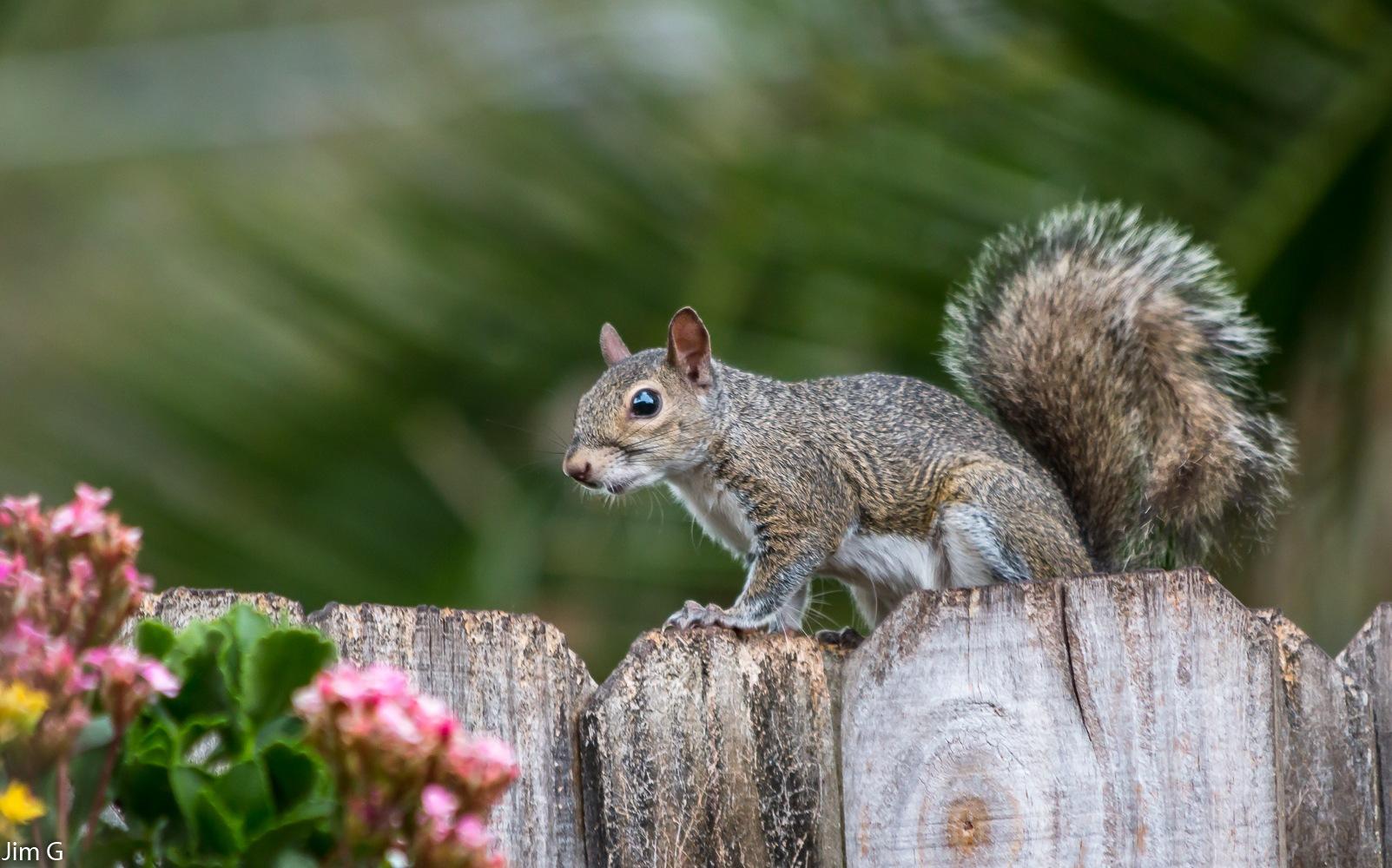Nervous Squirrel by Jim Graham