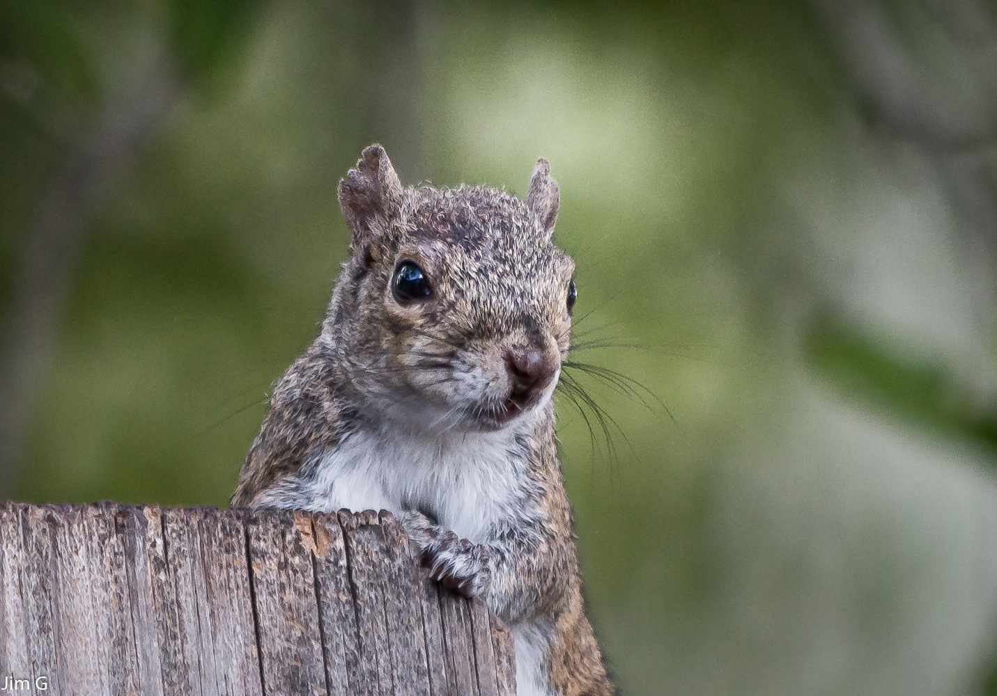Young Squirrel Close-Up by Jim Graham