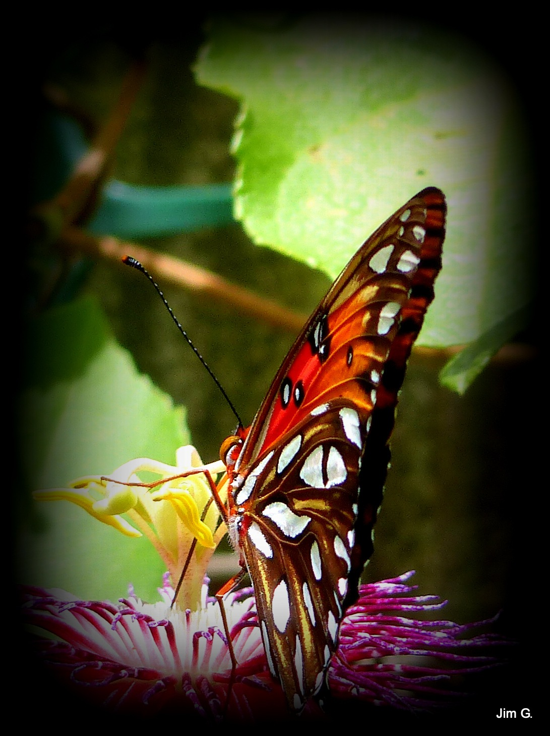 Butterfly Wing by Jim Graham