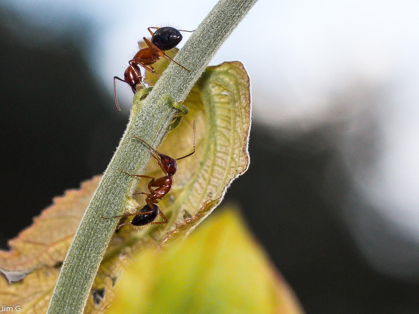 Ants Macro by Jim Graham