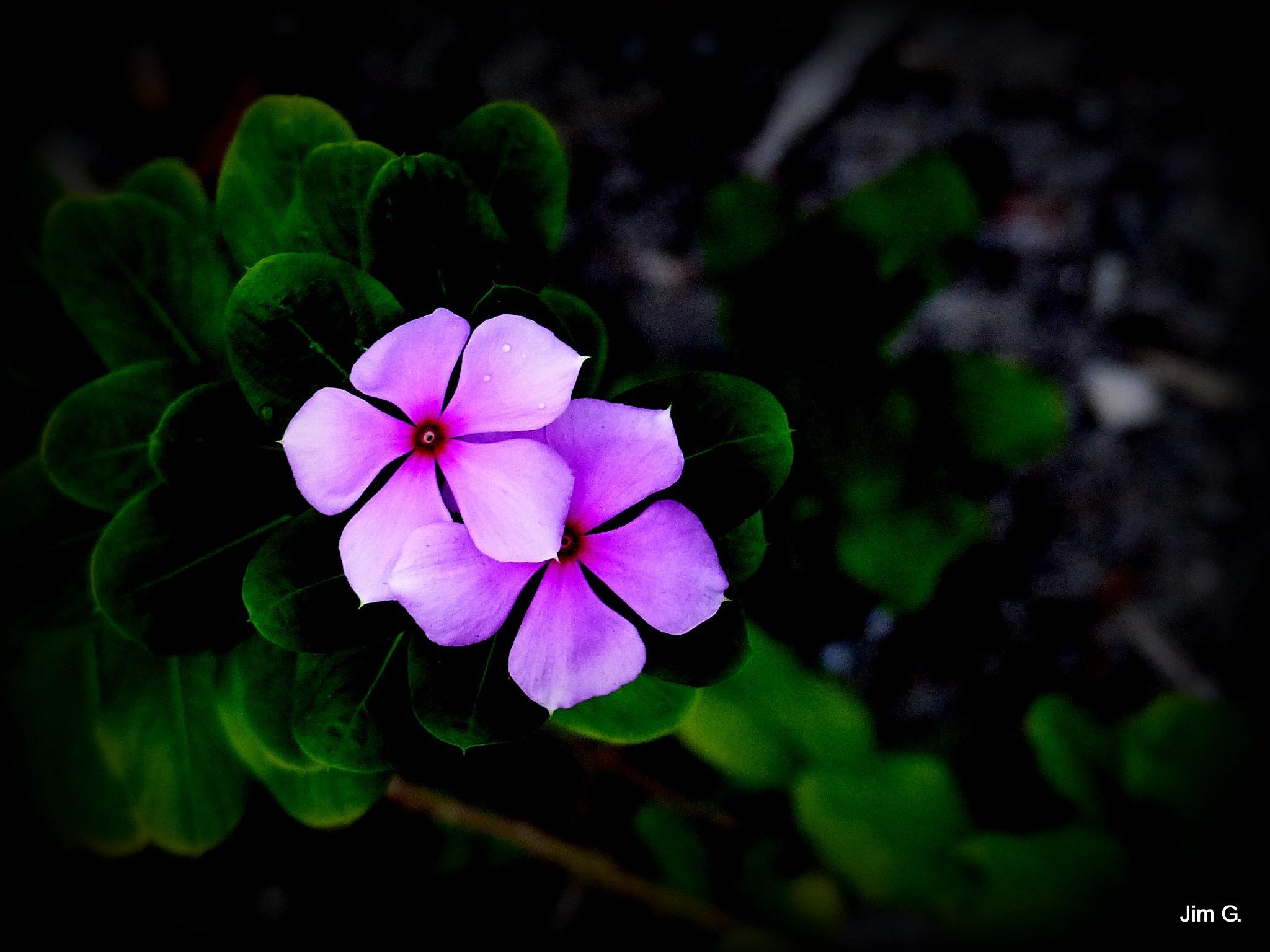 Blooms by Jim Graham