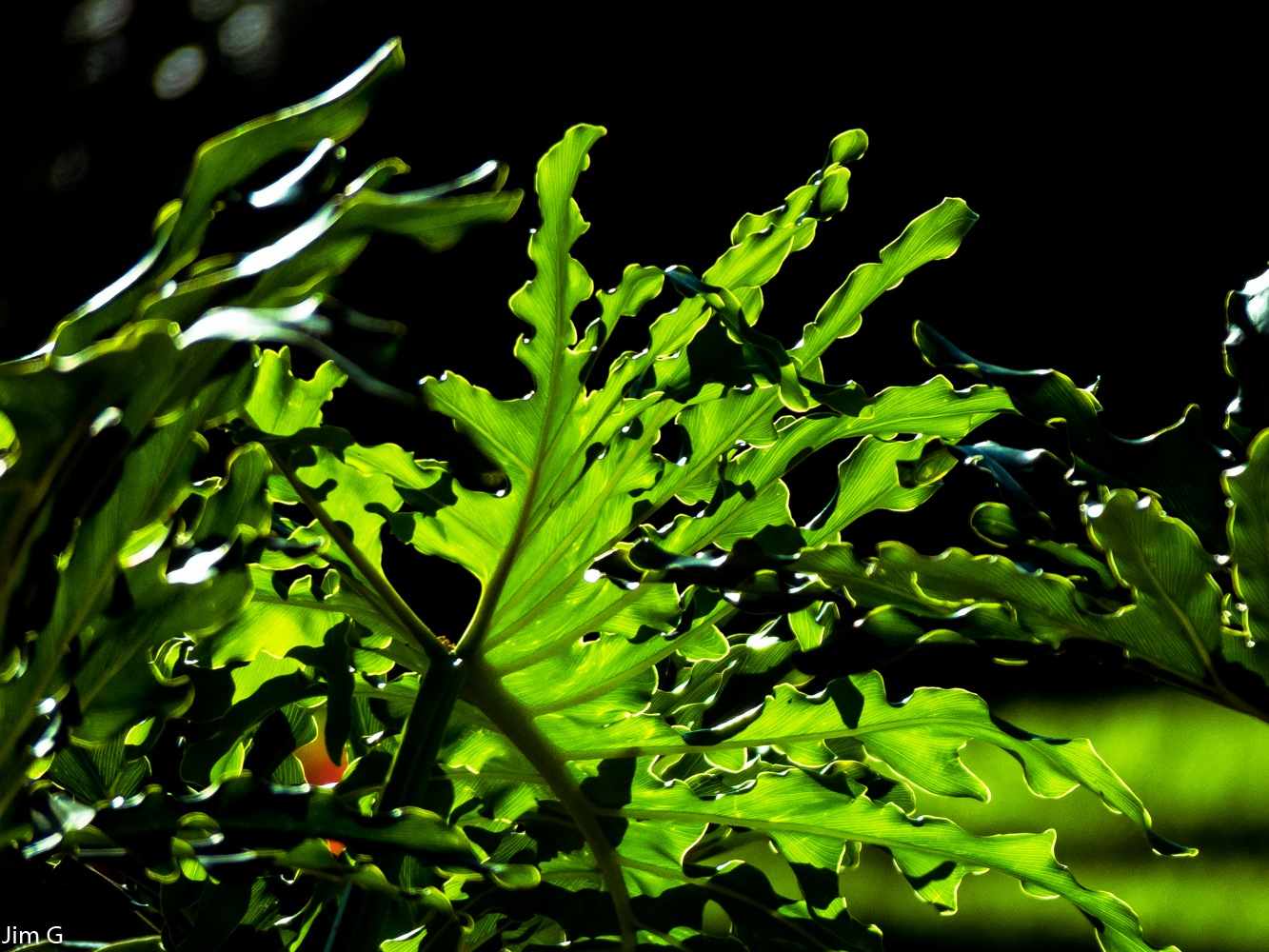 Green Tropical Plant by Jim Graham