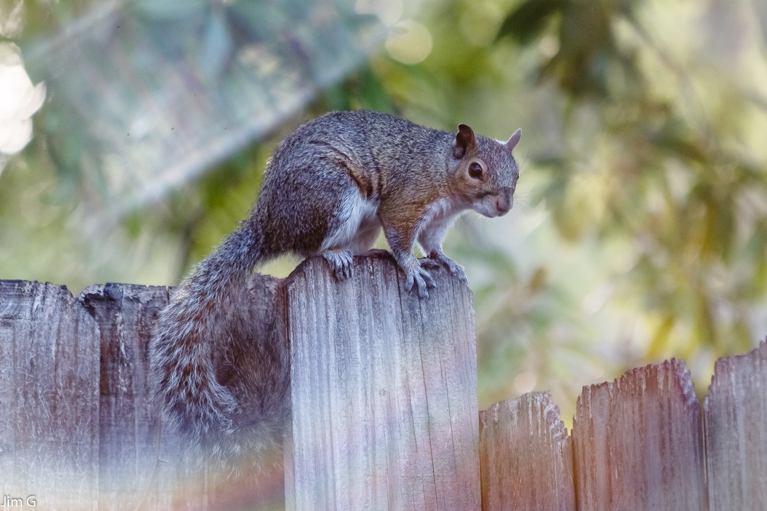 Squirrel by Jim Graham