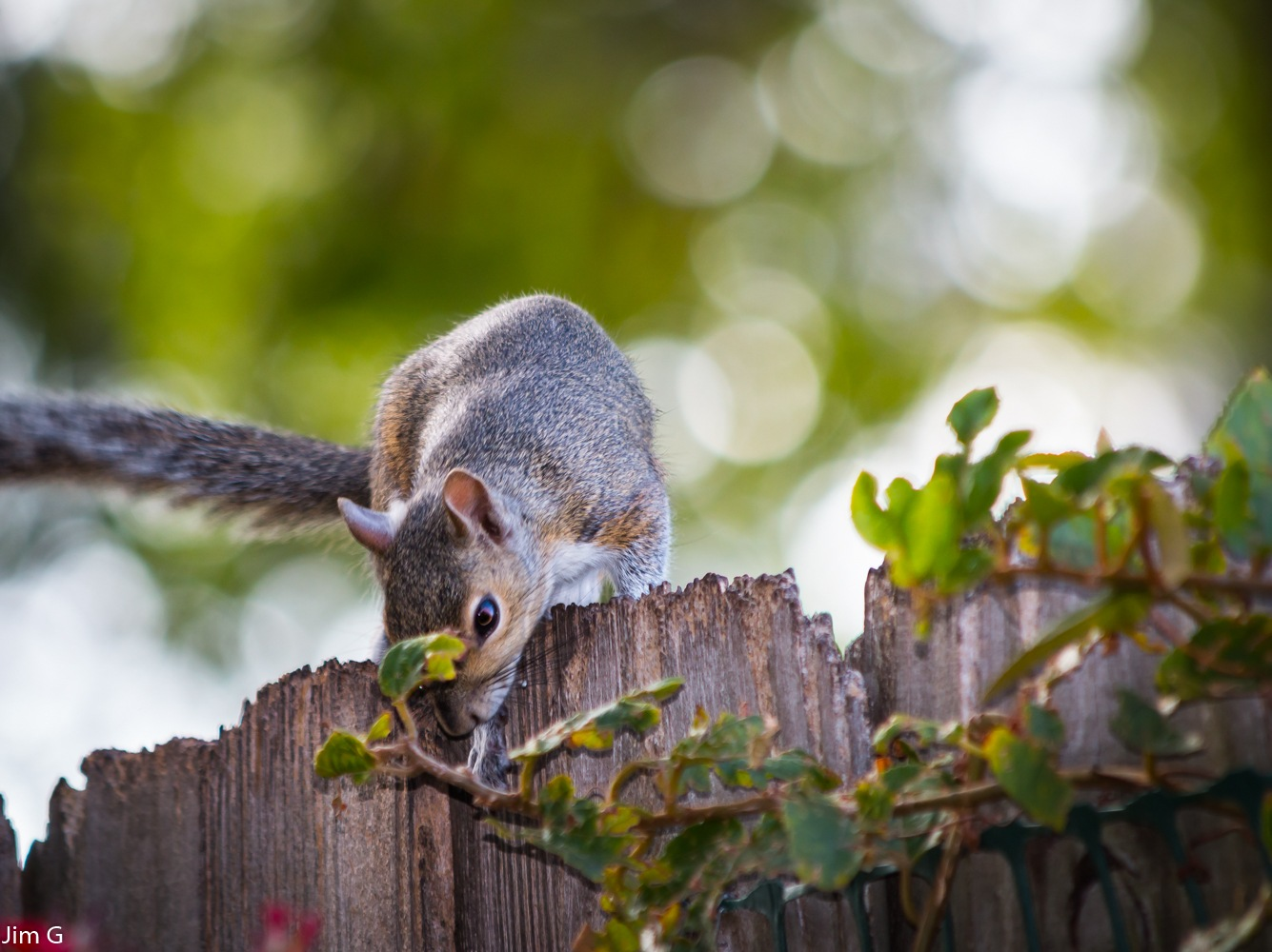 Squirrels will eat anything by Jim Graham