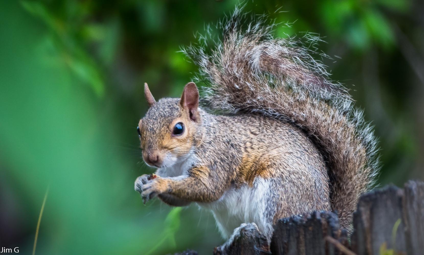 Squirrel close up by Jim Graham