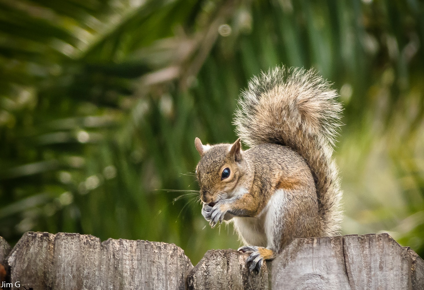 Squirrel in bright sunlight by Jim Graham