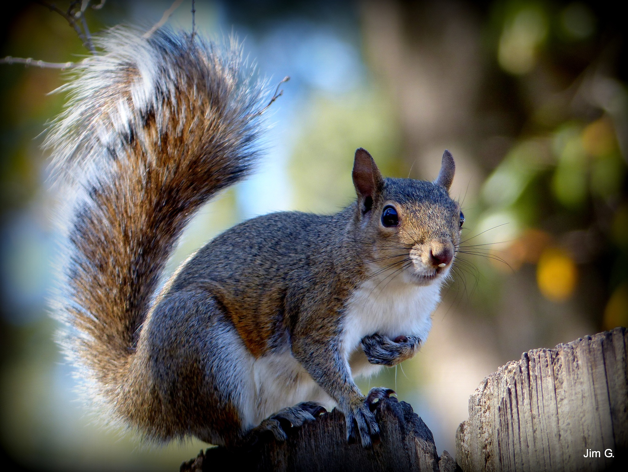 Squirrel Begging by Jim Graham