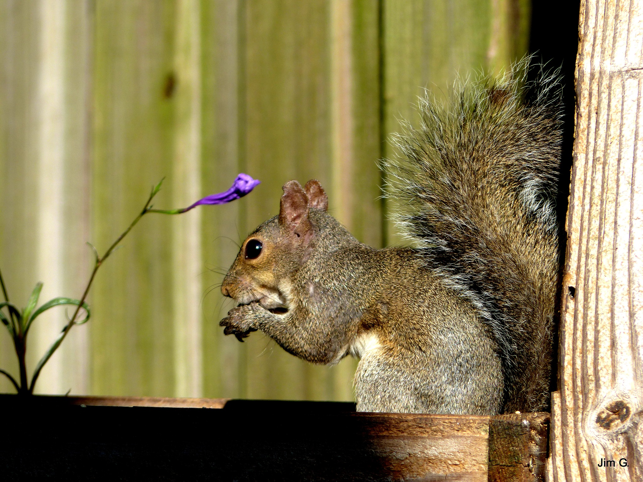 Squirrel eating beneath bloom by Jim Graham