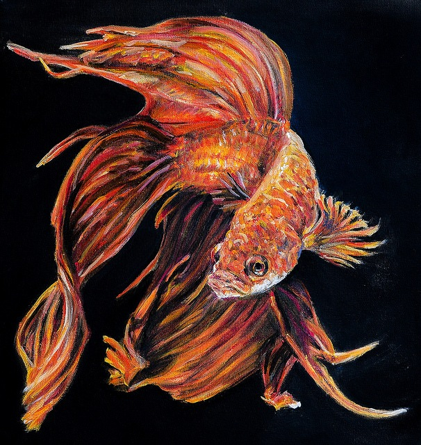 Siamese Fighting Fish  by Charna
