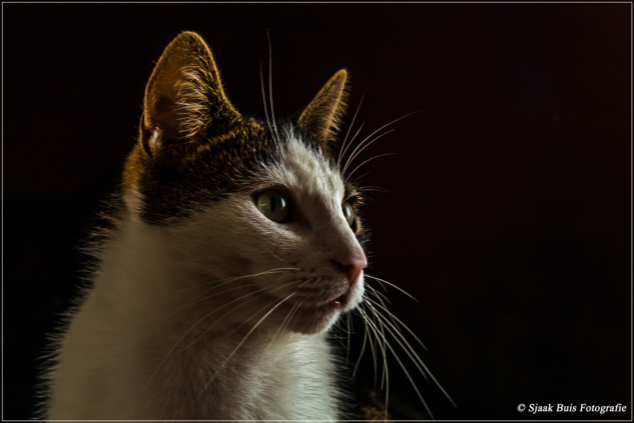 The Cat by Sjaak Buis