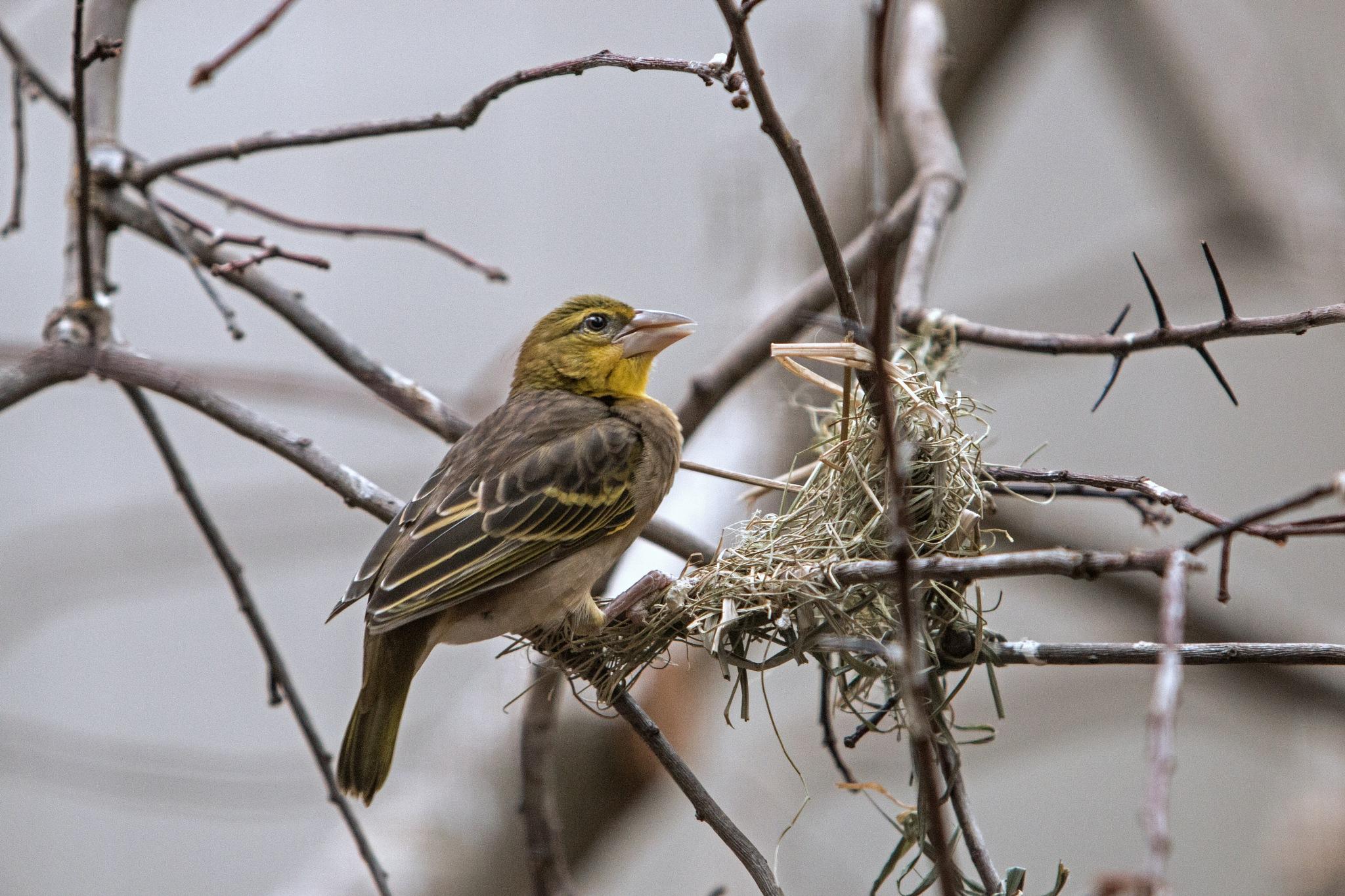 Bird by Sjaak Buis