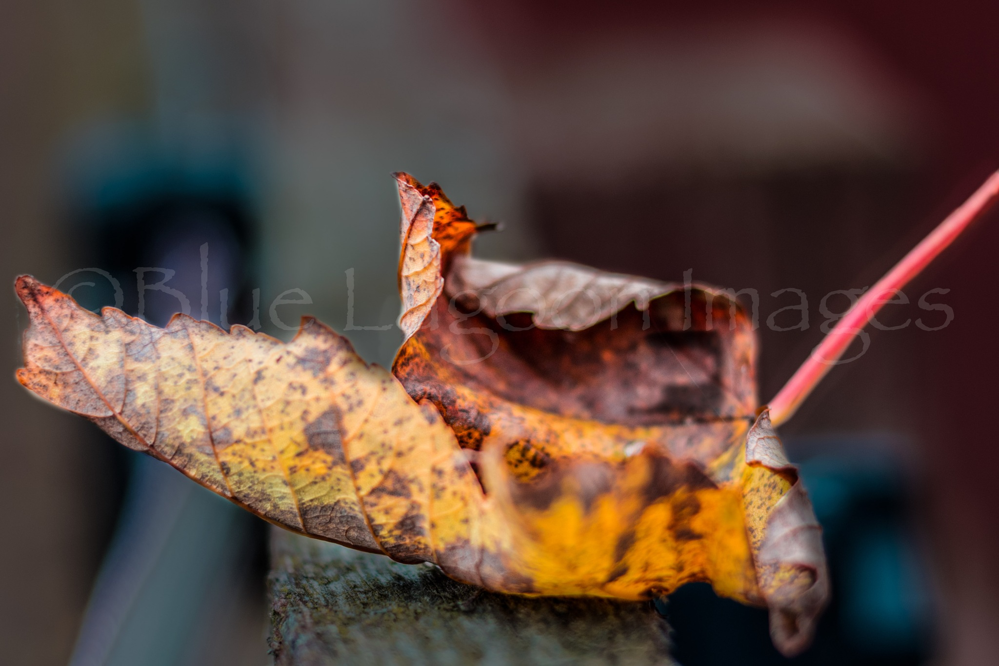 Autumn by Blue Lagoon Images