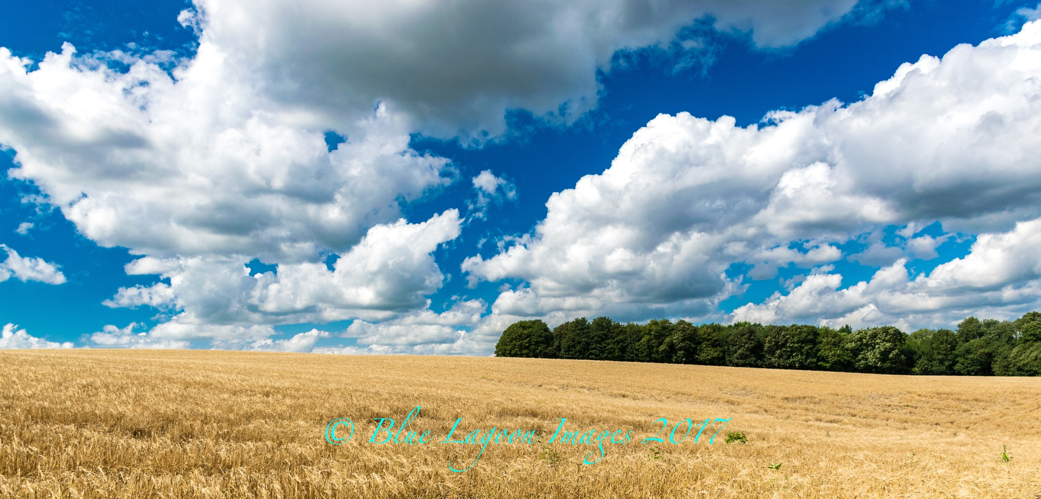 View across the field by Blue Lagoon Images