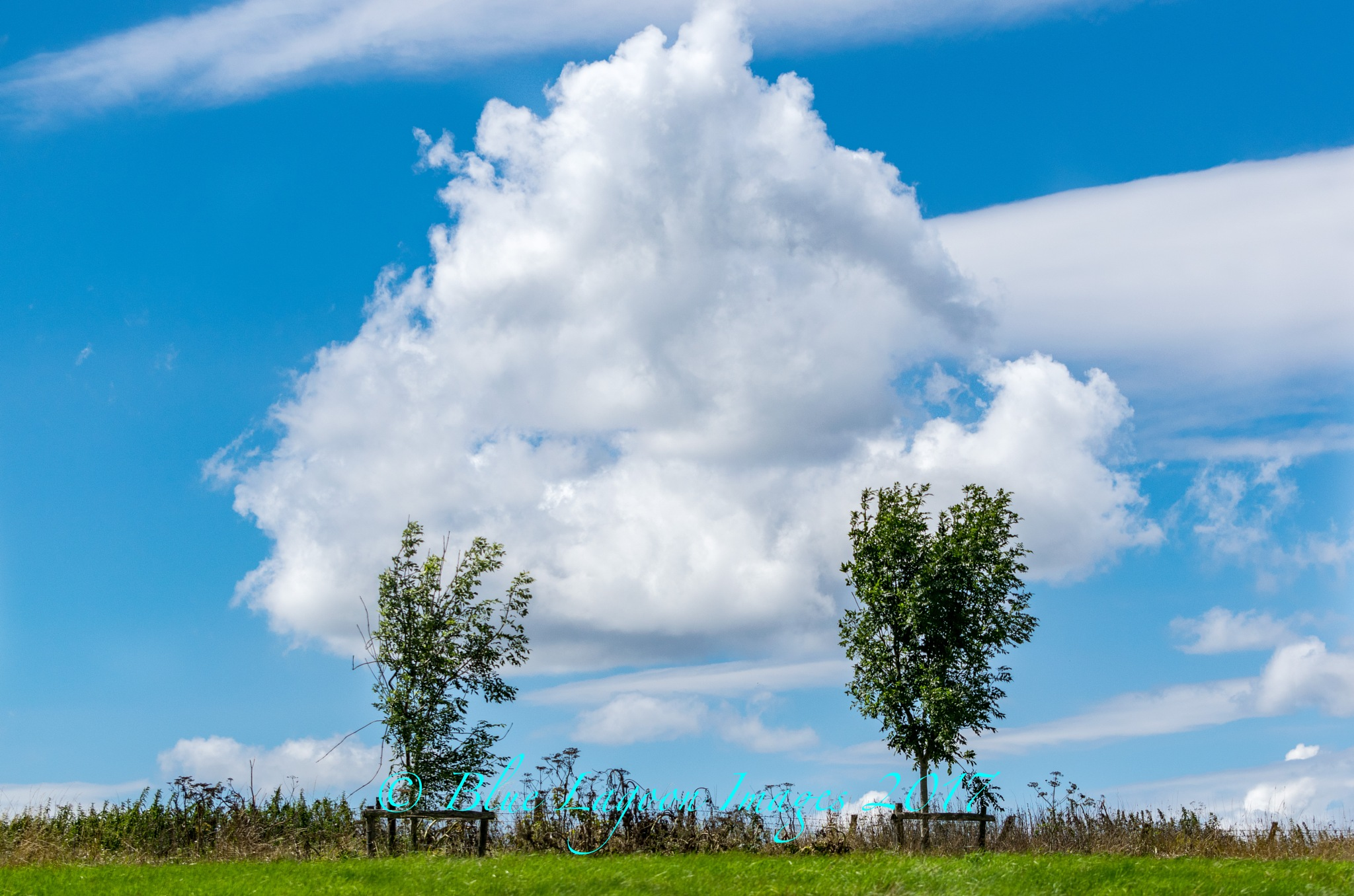 Cloud between two trees by Blue Lagoon Images