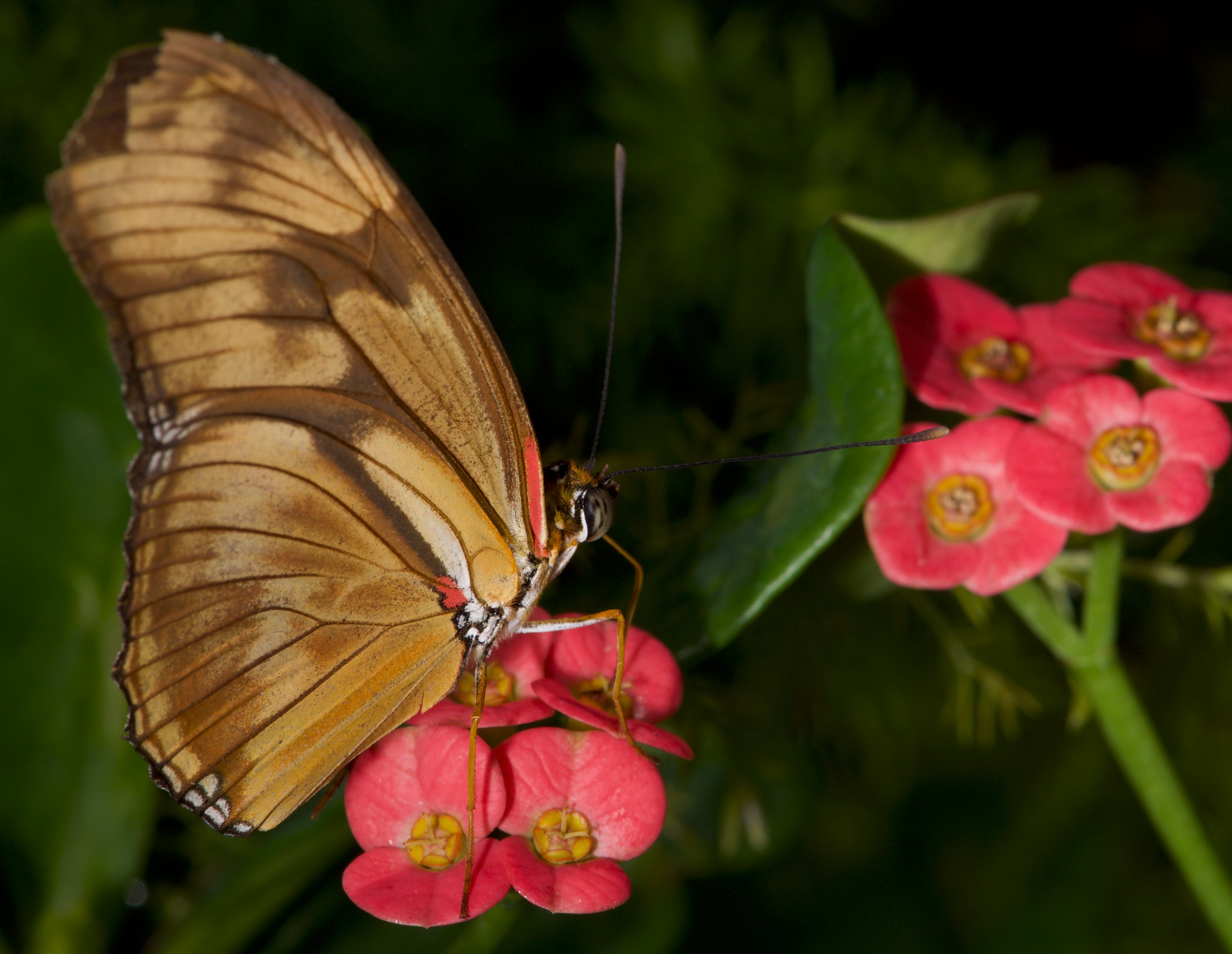 Butterfly 10 by Brian Baity