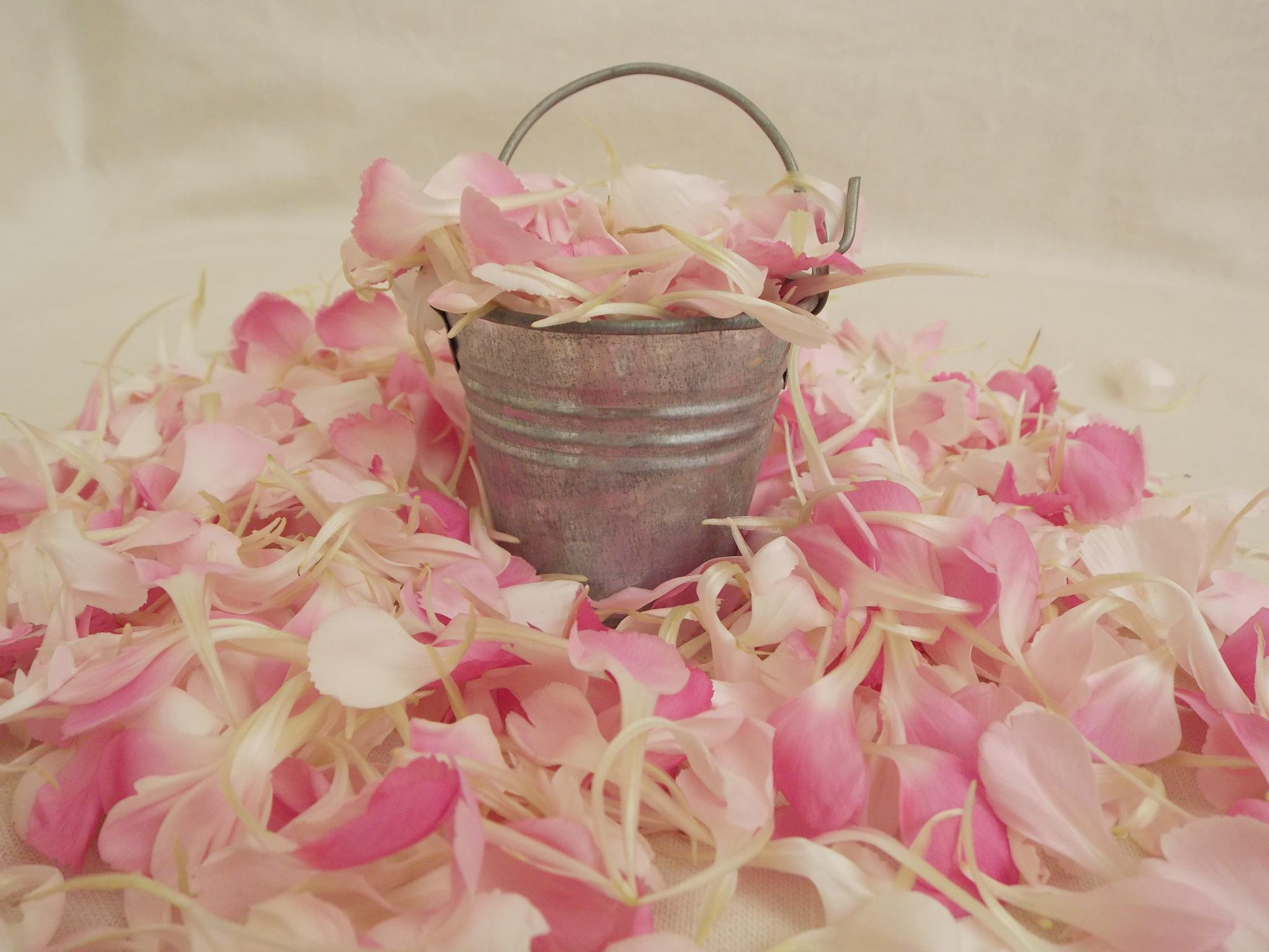 Pink Bucket full by Esther Allberry