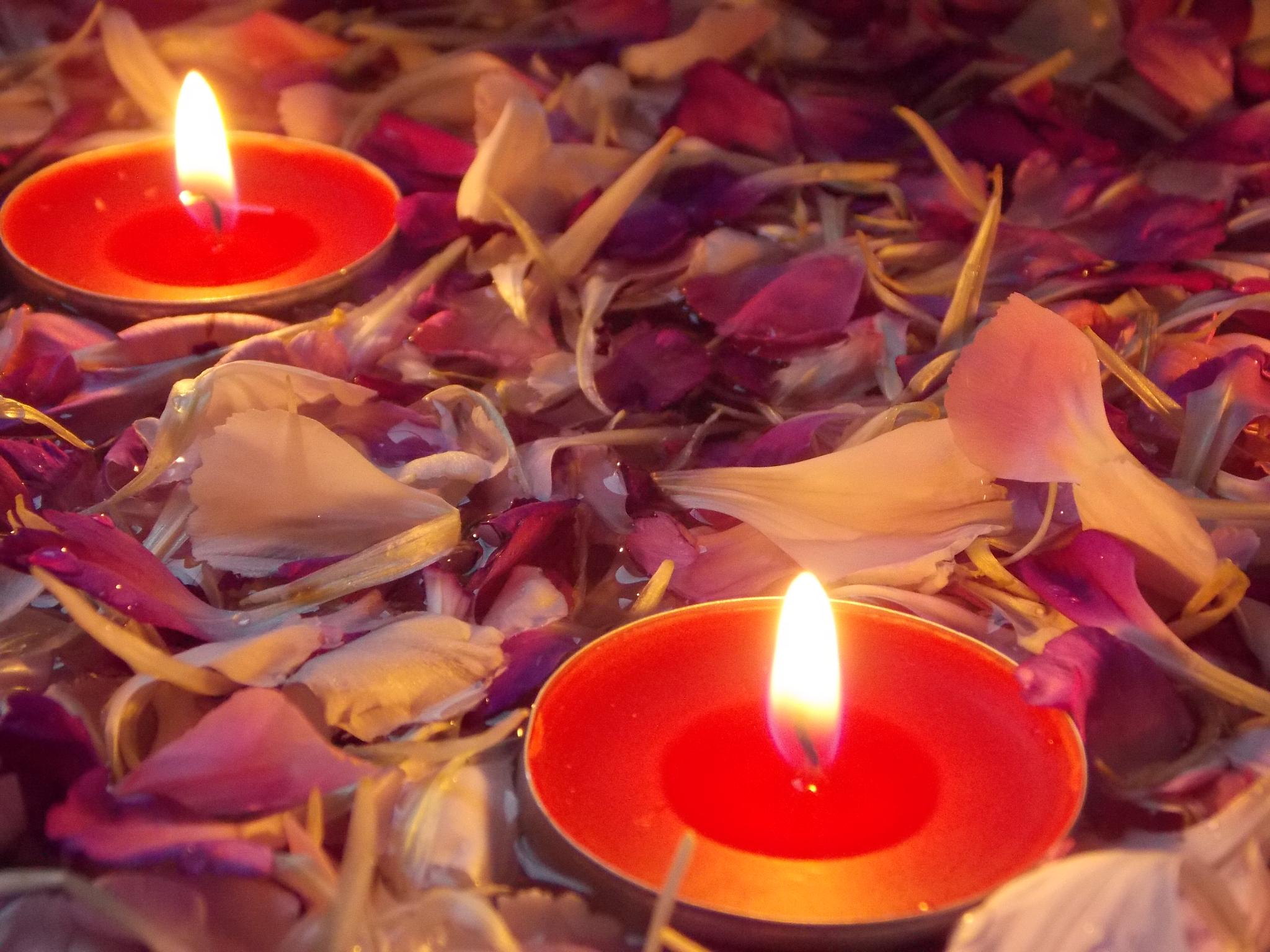 Petals by Candle light by Esther Allberry