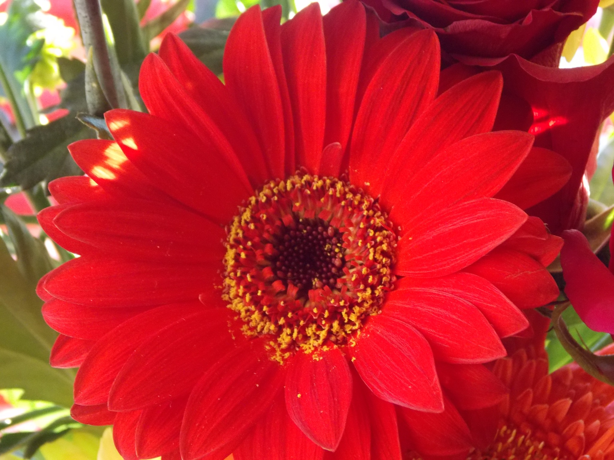 Red Flower by Esther Allberry
