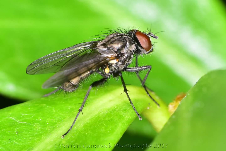 Fly by darrencammock
