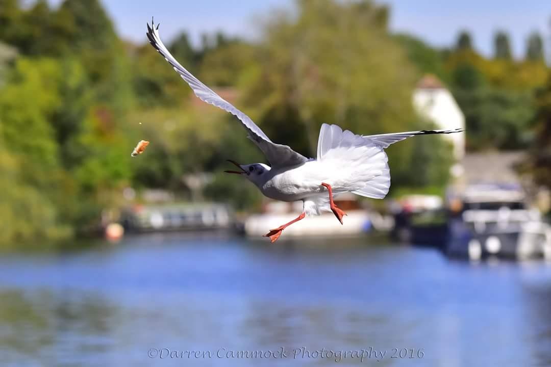 Dancing Gulls by darrencammock