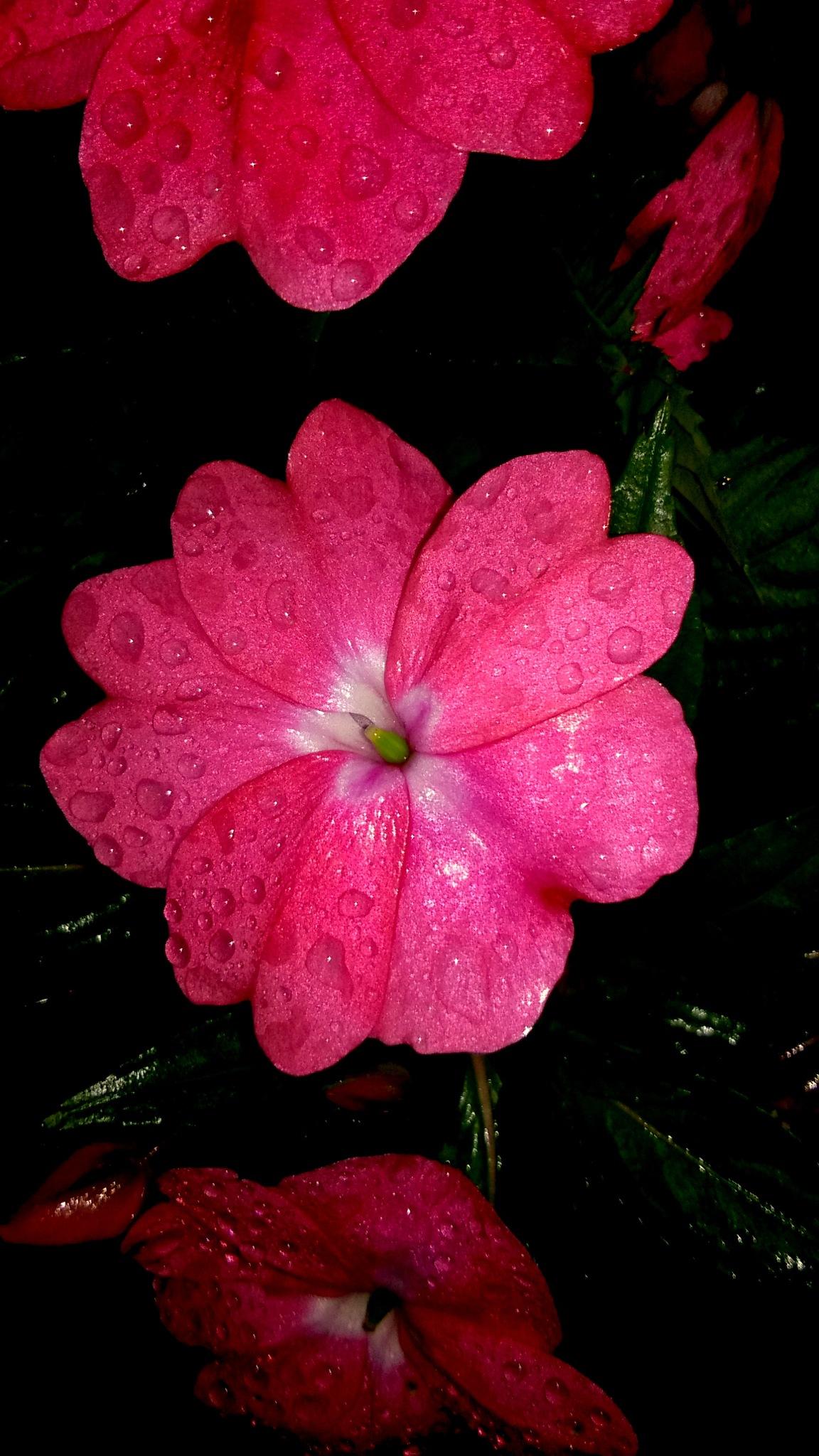 Flowers by souvikit