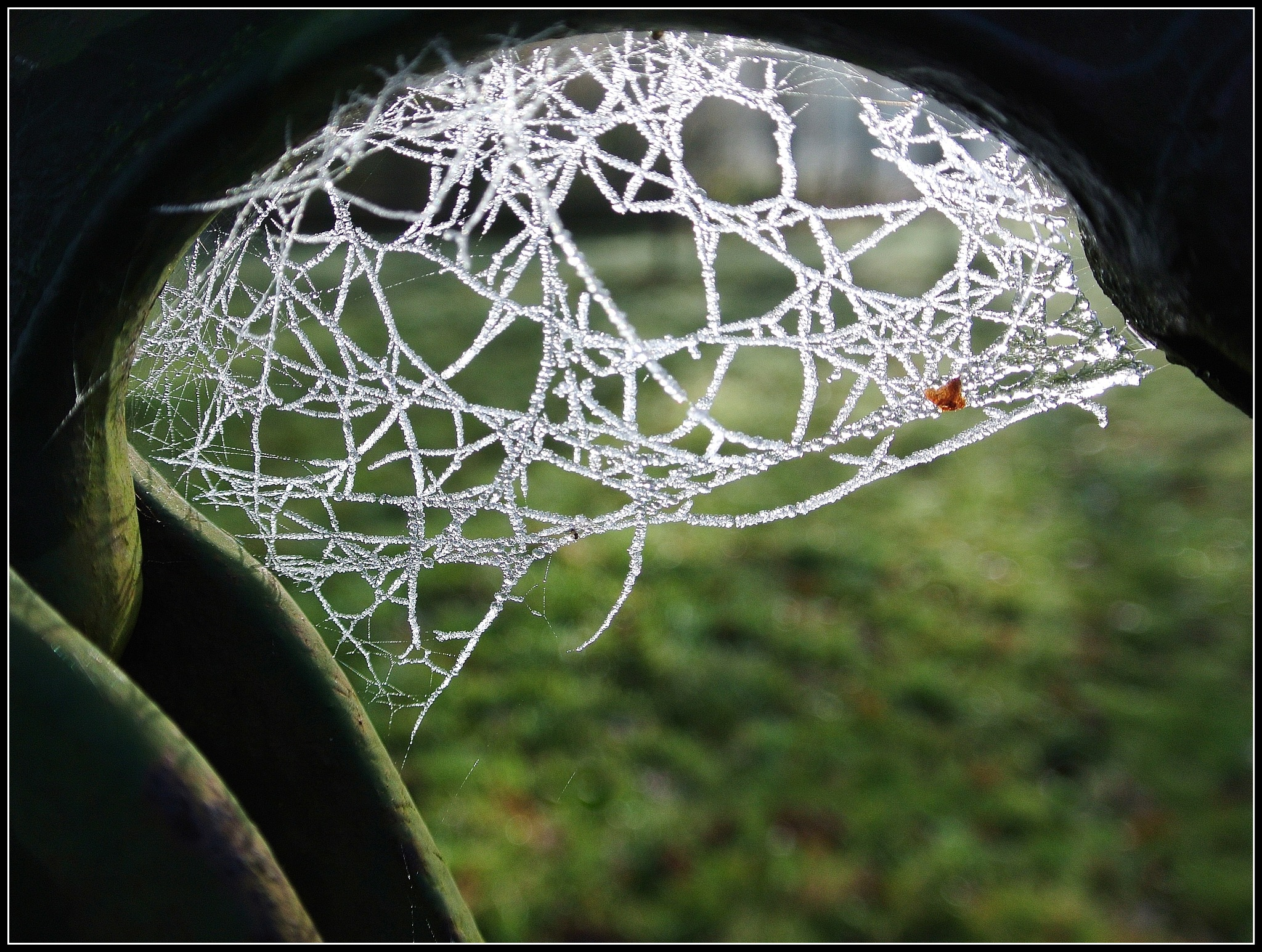 SPIDER ARTWORKS by Jacob van der Veen