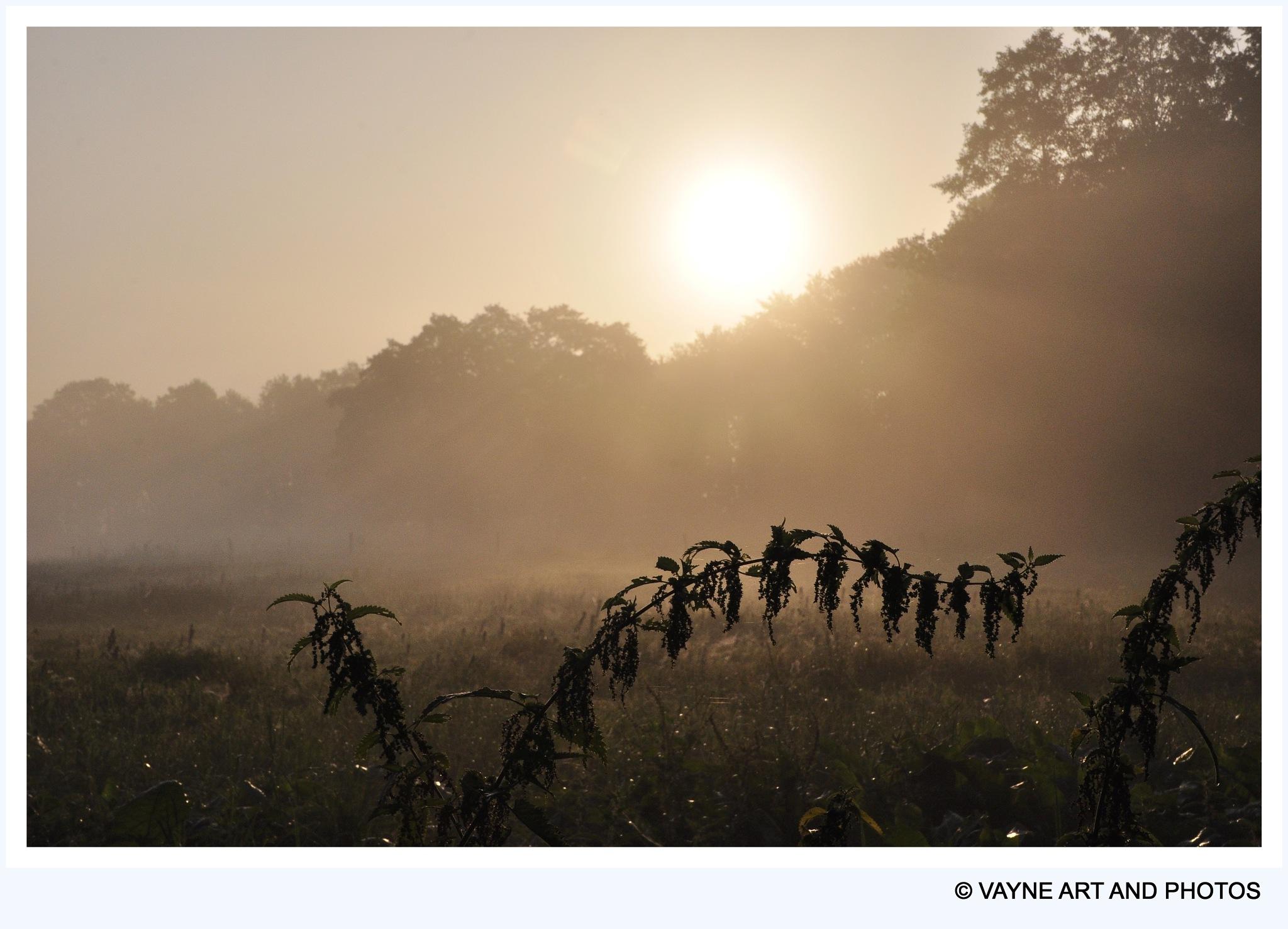 Sunset by Jacob van der Veen