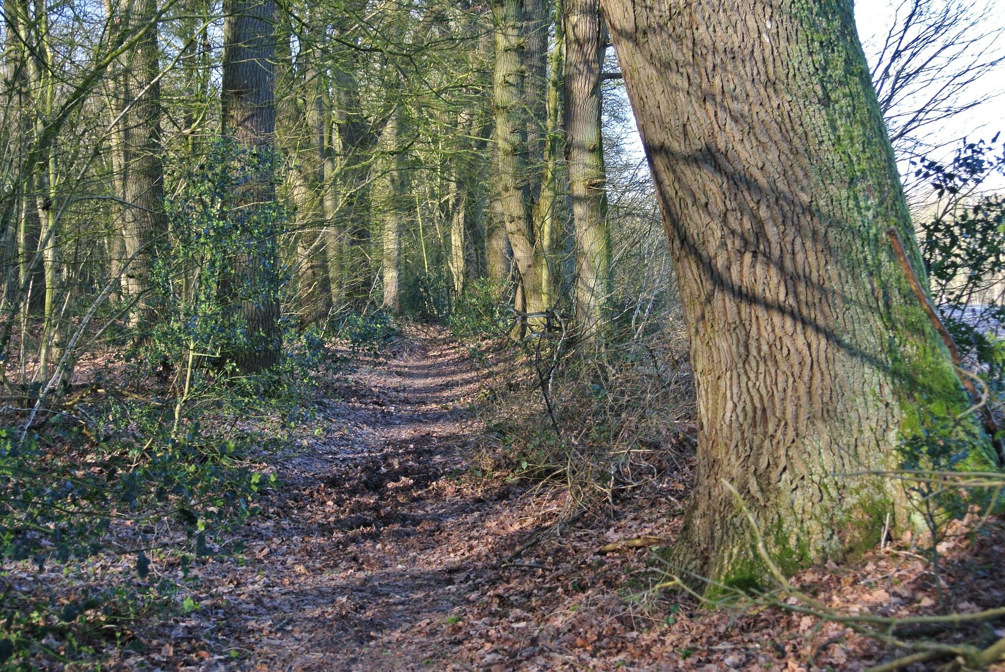 Into the wood by Jacob van der Veen