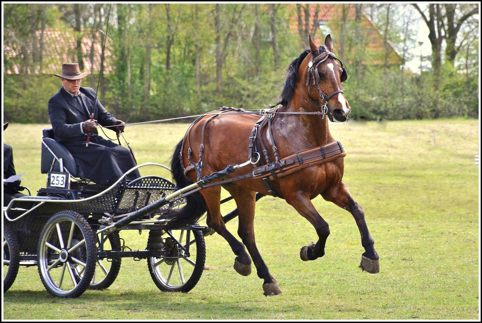 Big horsejump ! by Jacob van der Veen
