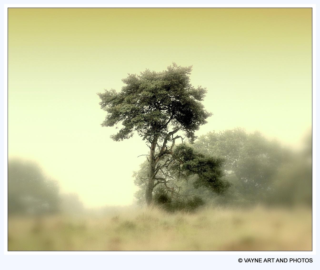 On the  woodborder by Jacob van der Veen