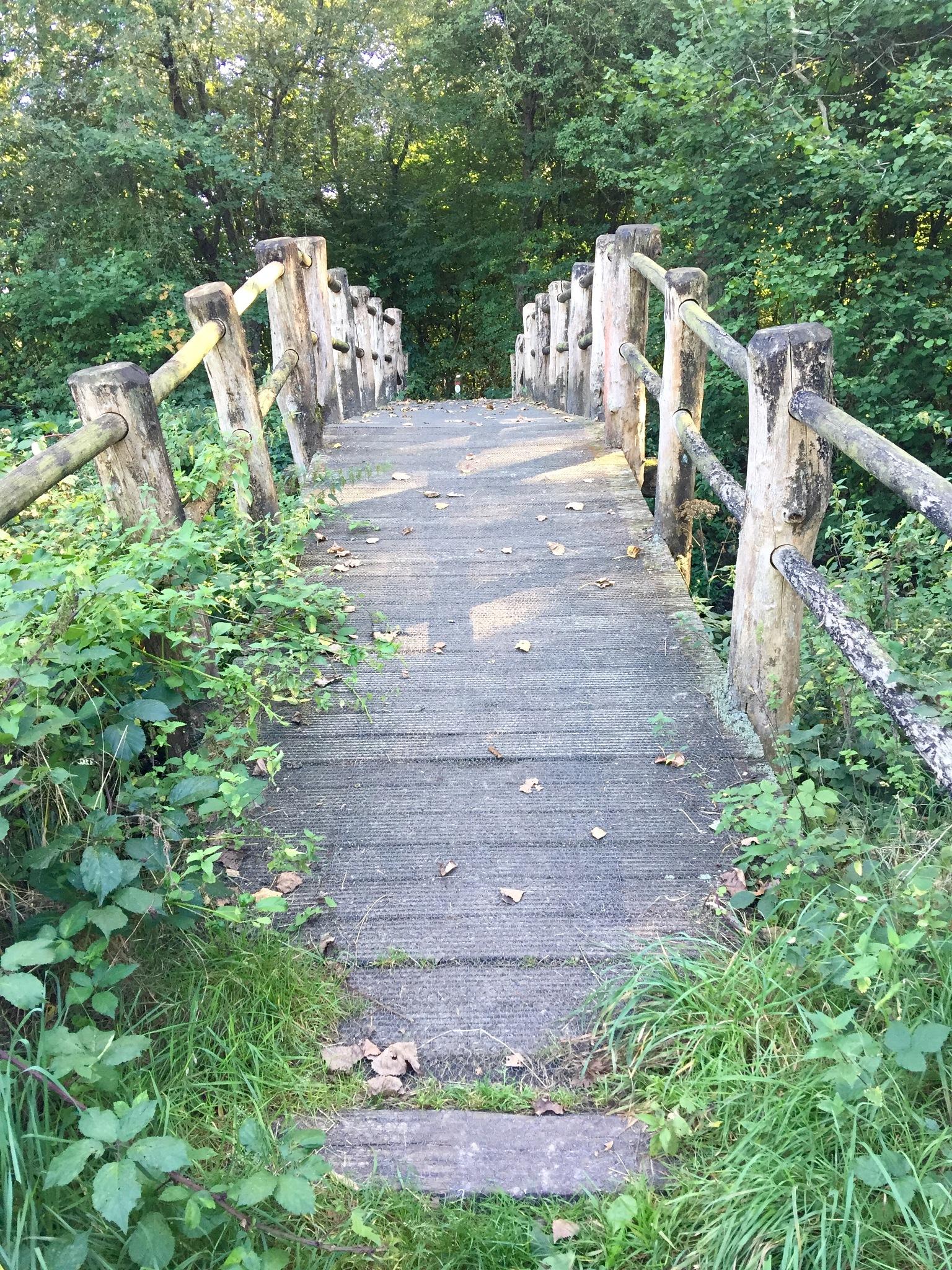 Bridge over troubled water  by Sonja Everstijn