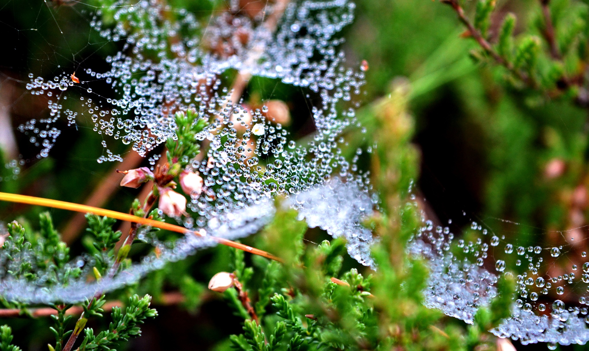 Dew drops by AgitaPudule