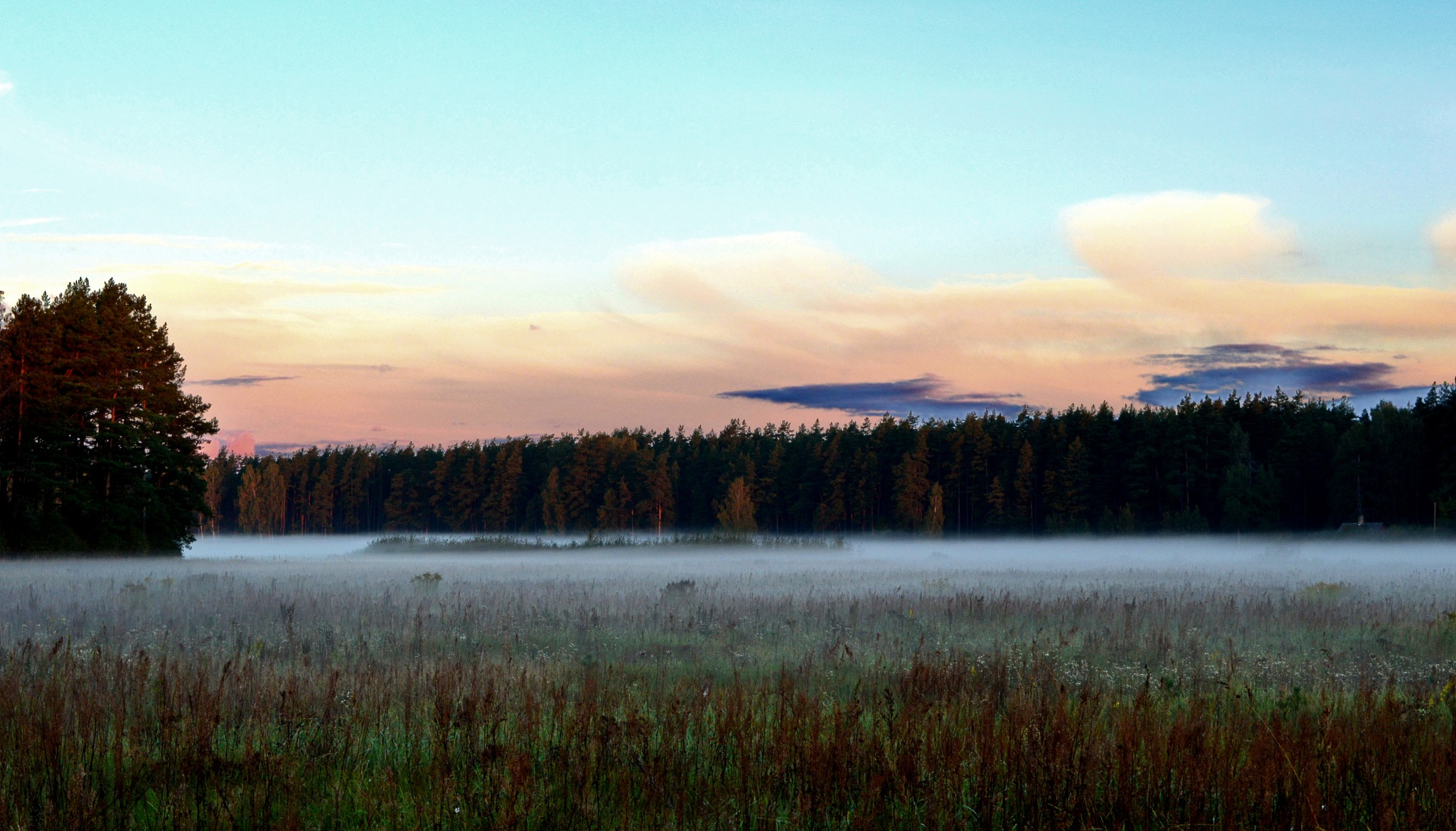 Morning fog by AgitaPudule