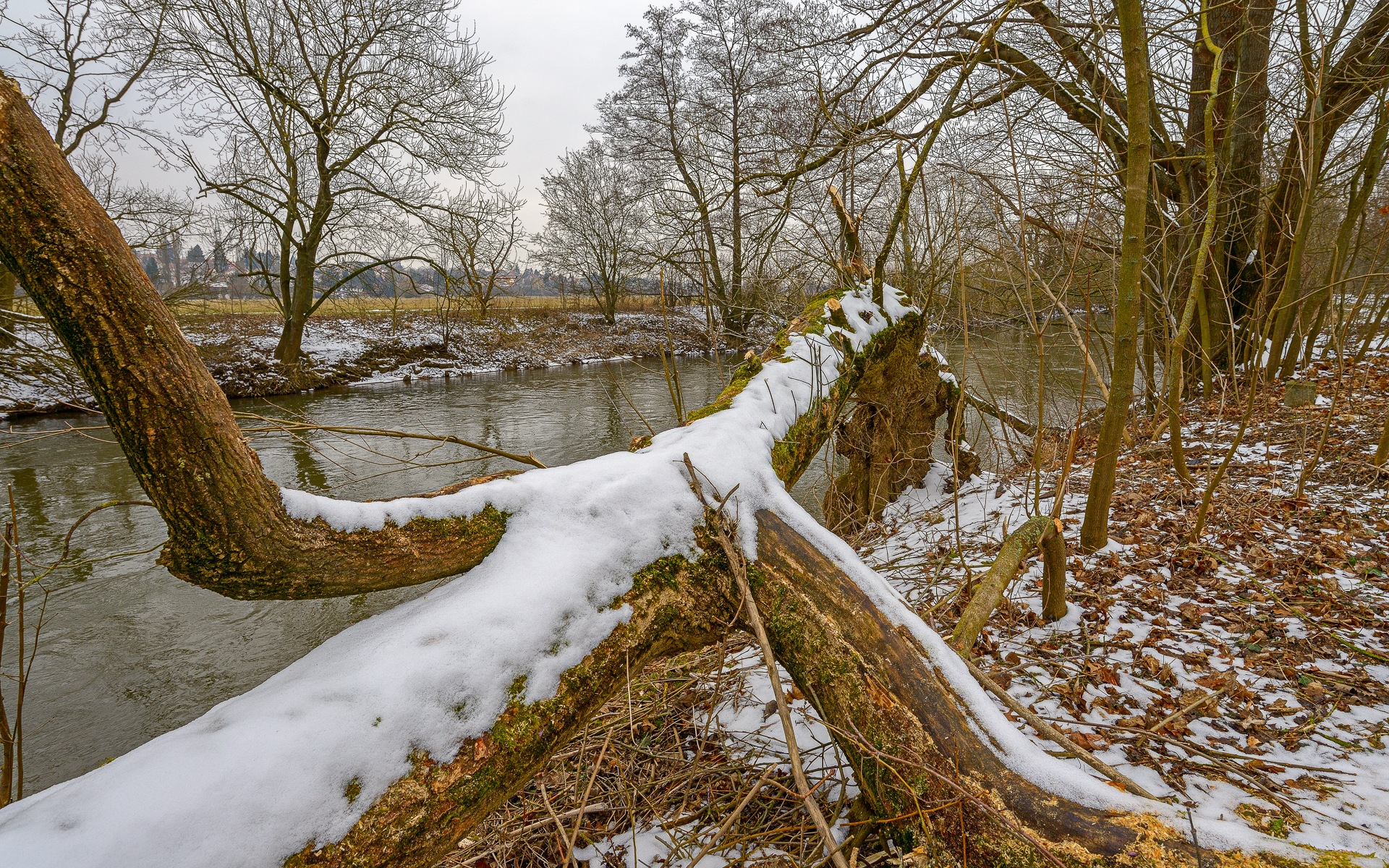 long tree by Robert Glöckner