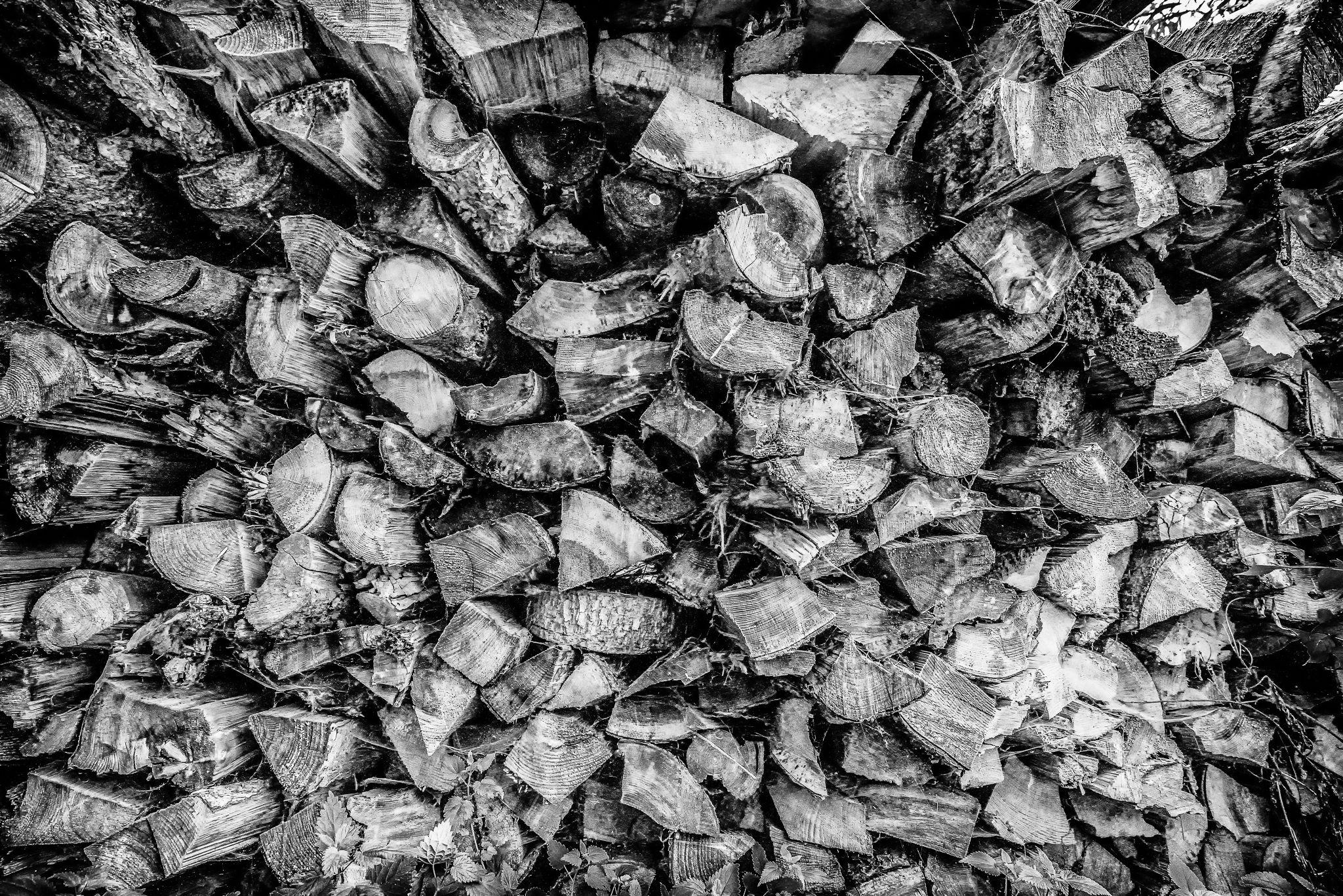 wood by Robert Glöckner