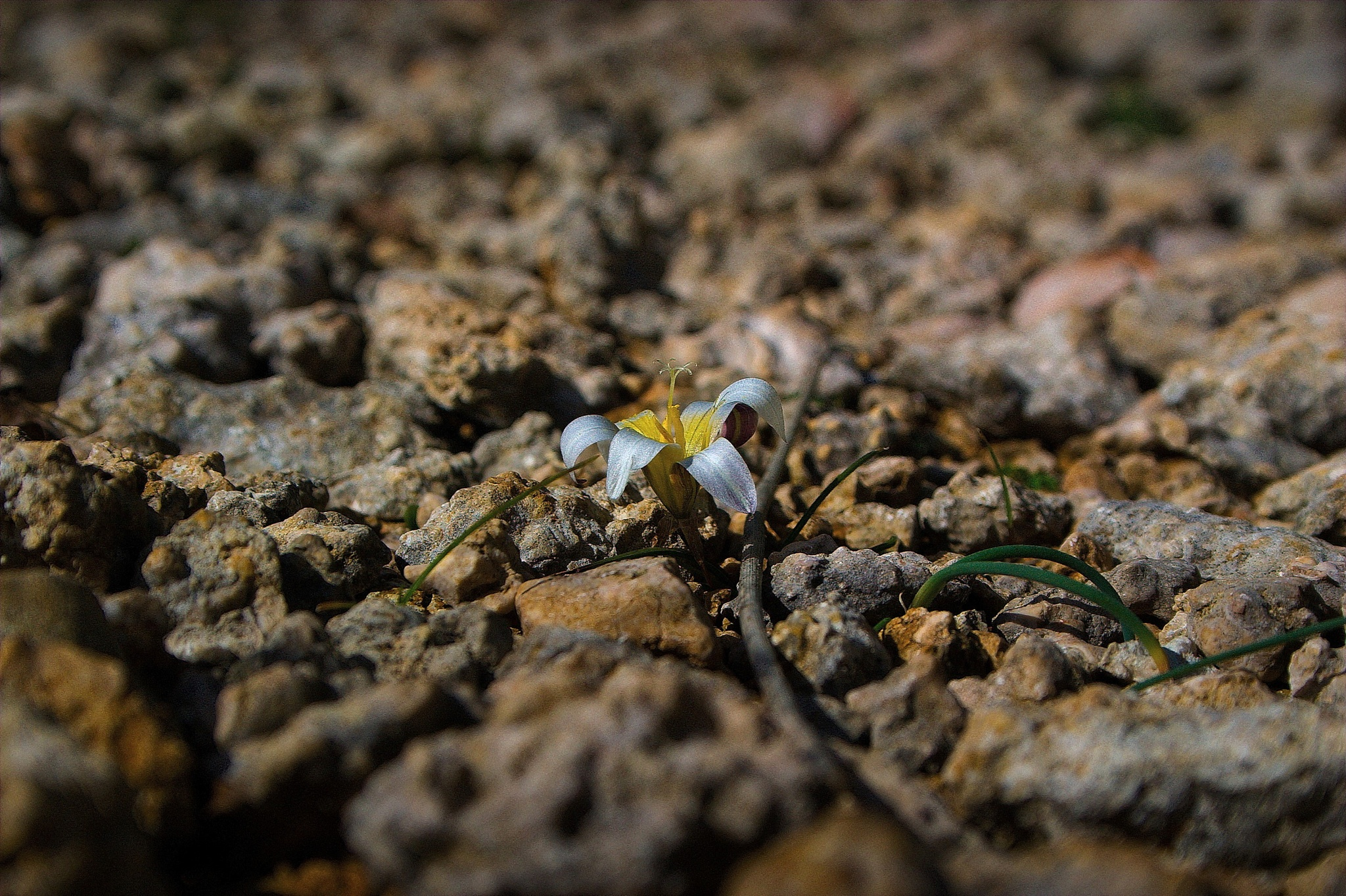 life from stone... by Milos Jacimovic