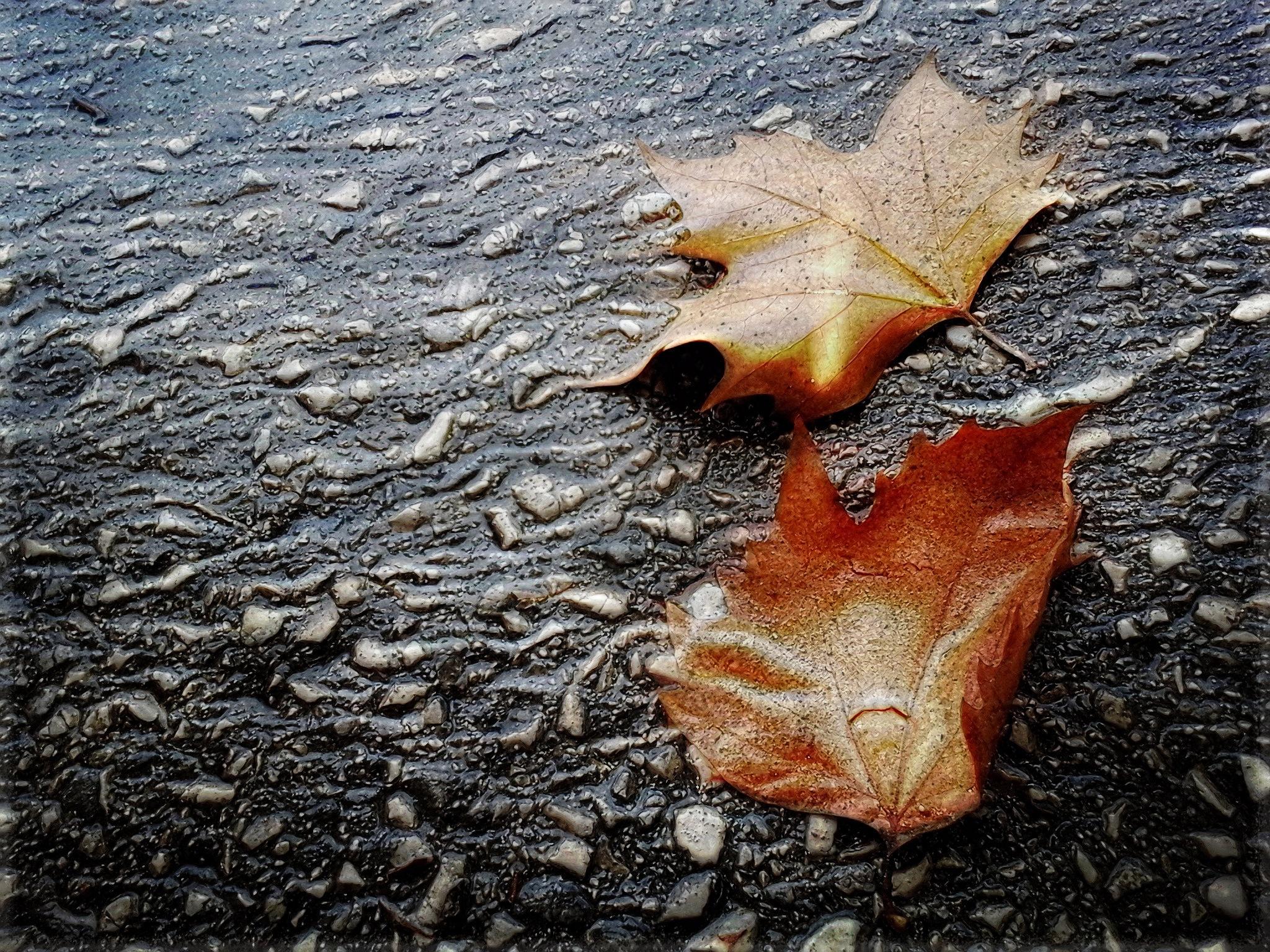 autumn by Milos Jacimovic