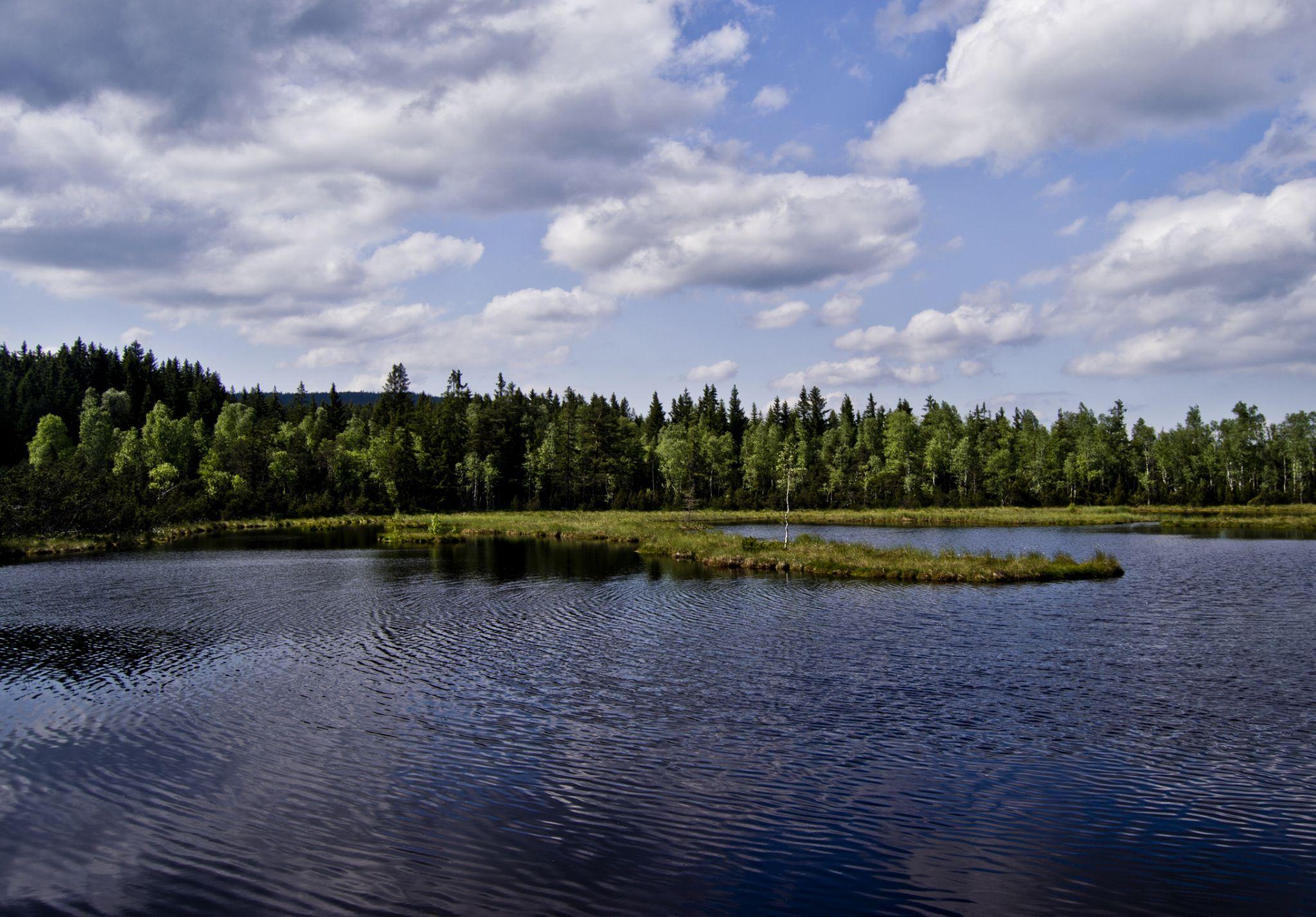 Bohemia Forest by papaaja9