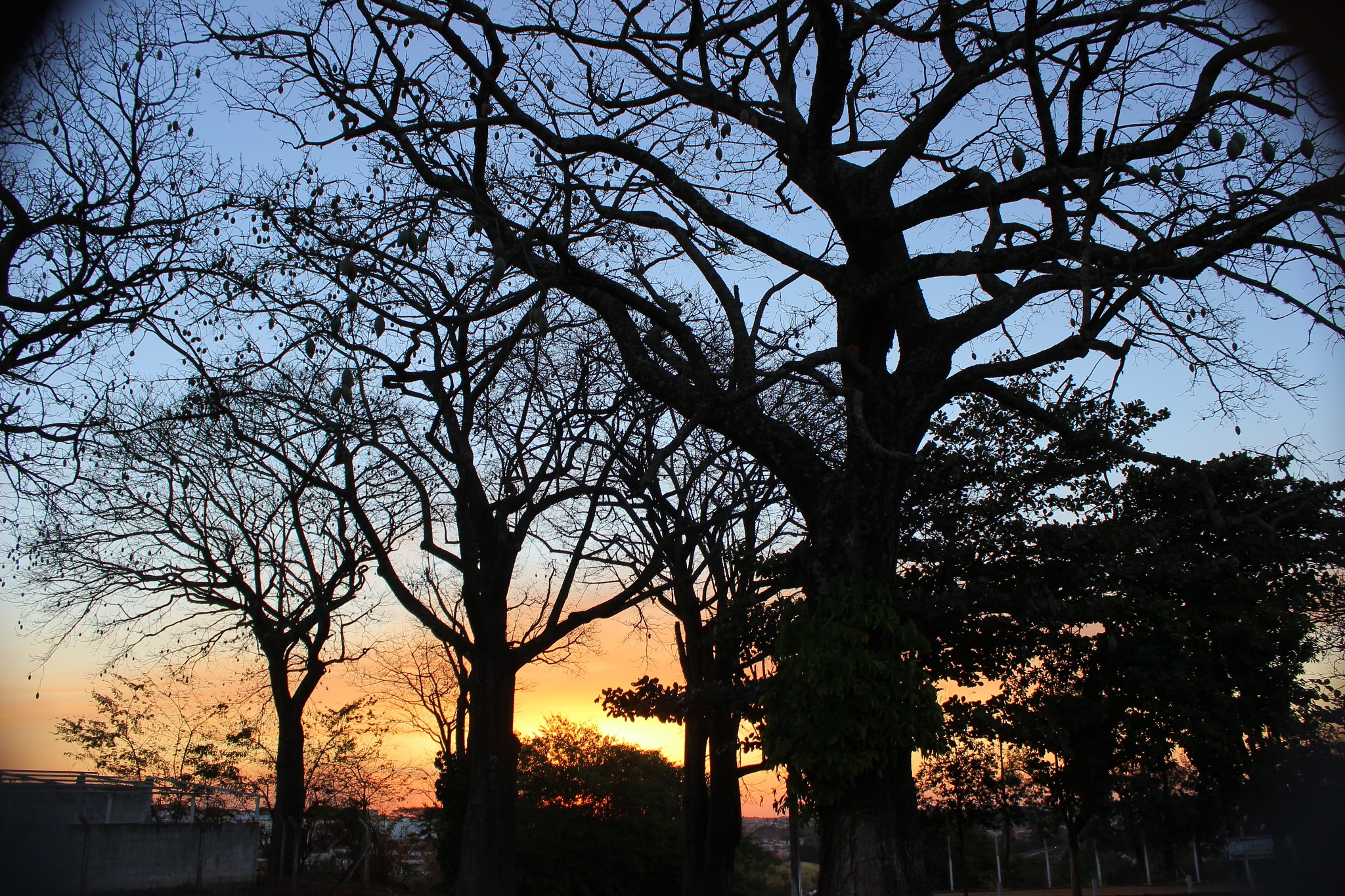 Sunset trees  by andreantoniofelipe