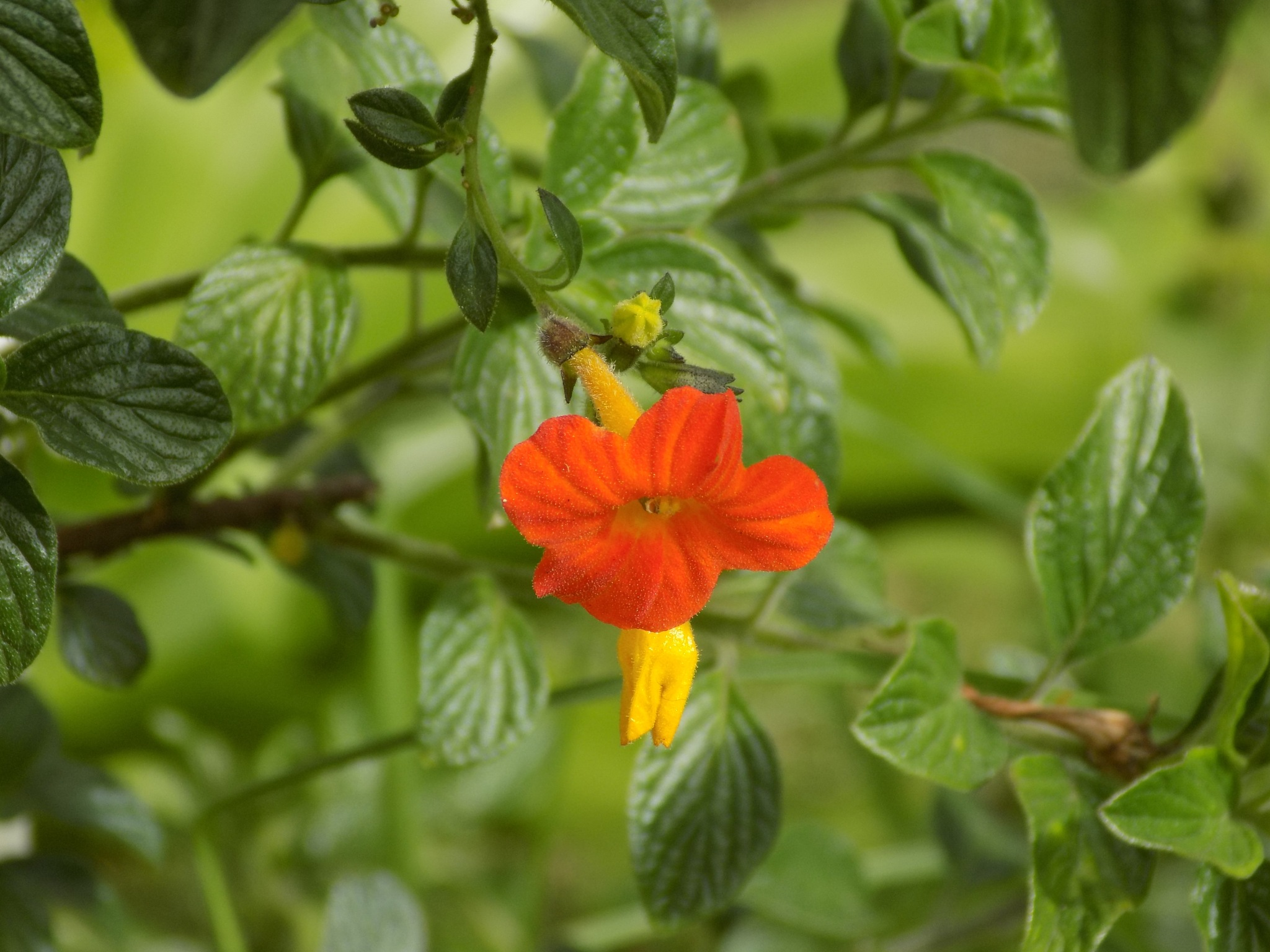Flower by Chandramoulieswar