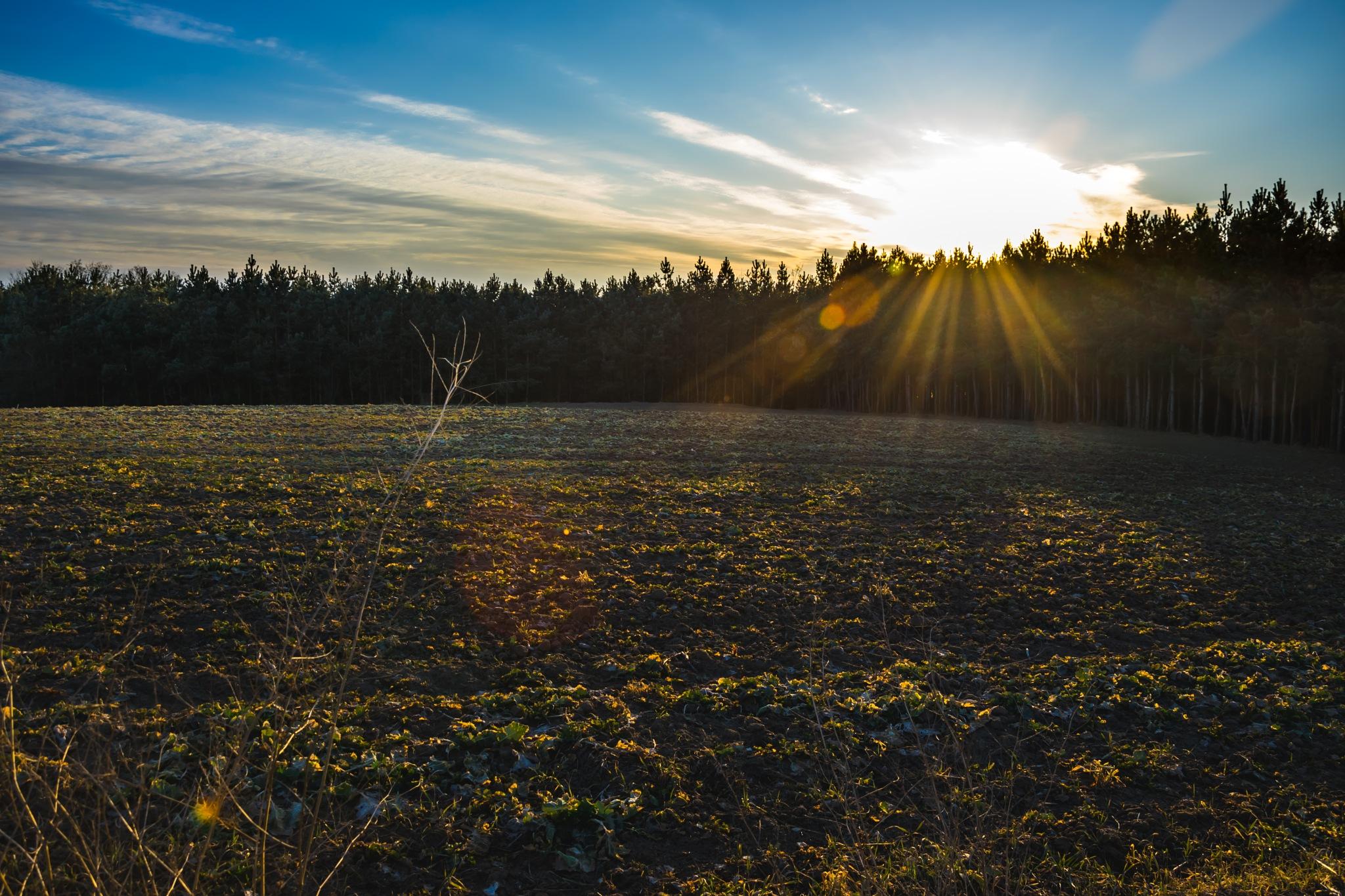 sunset by Rafał Wyzina